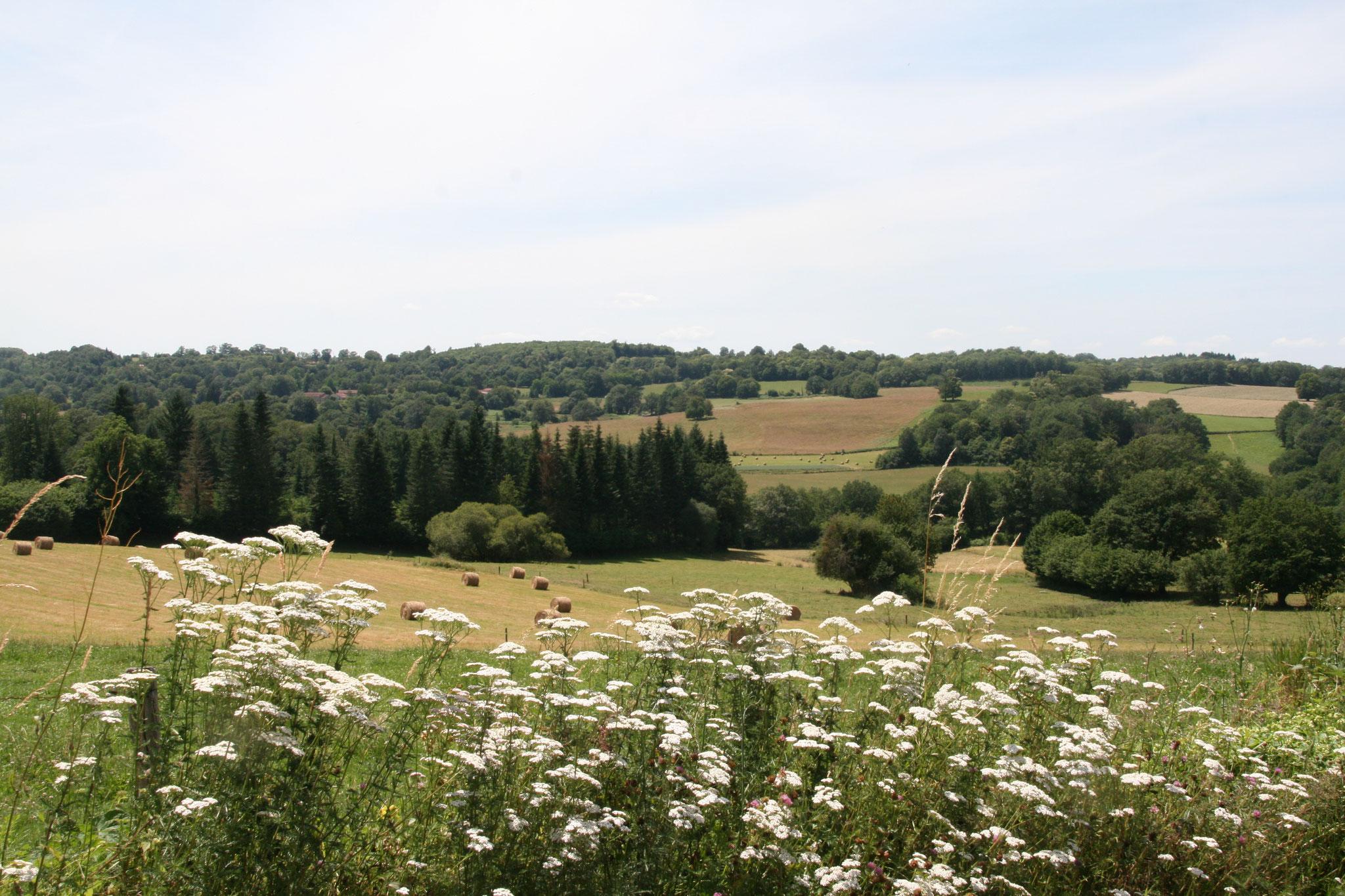 Un paysage bocager, côté ouest du territoire (commune de Saint-Denis-des-Murs).