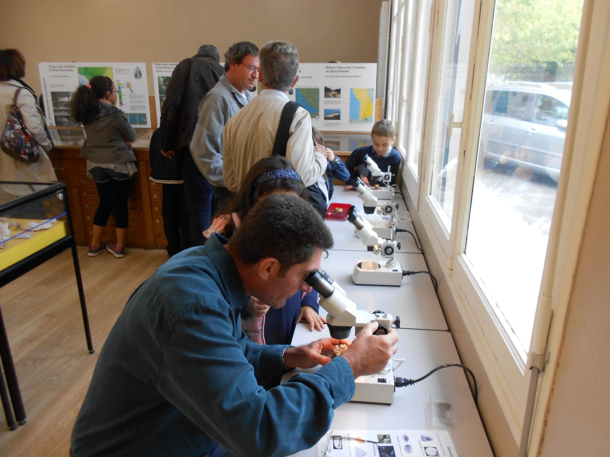 Journée internationale des fossiles : observation de la microfaune