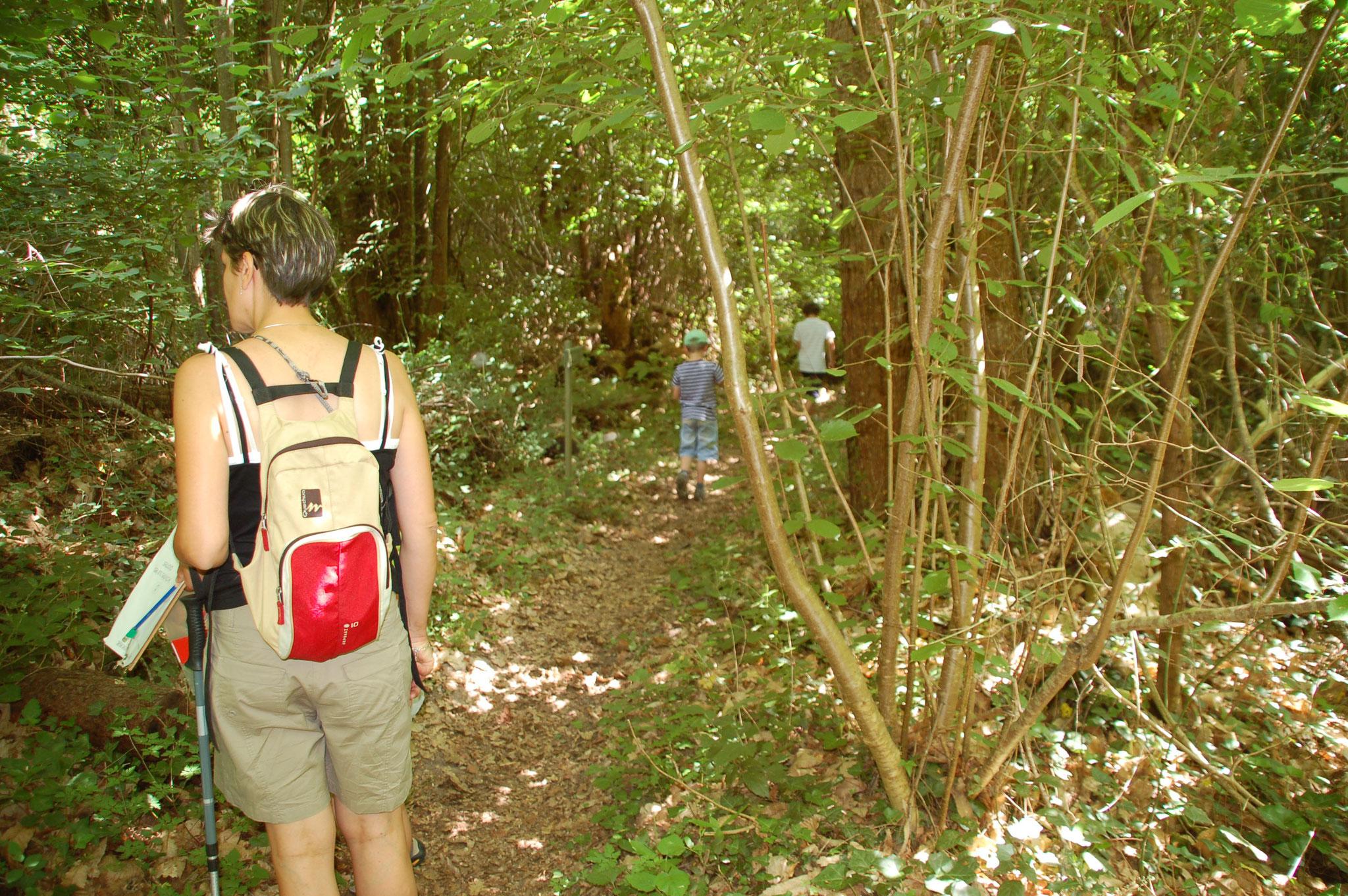 Ateliers de la forêt : balade  forestière à la recherche d'indices