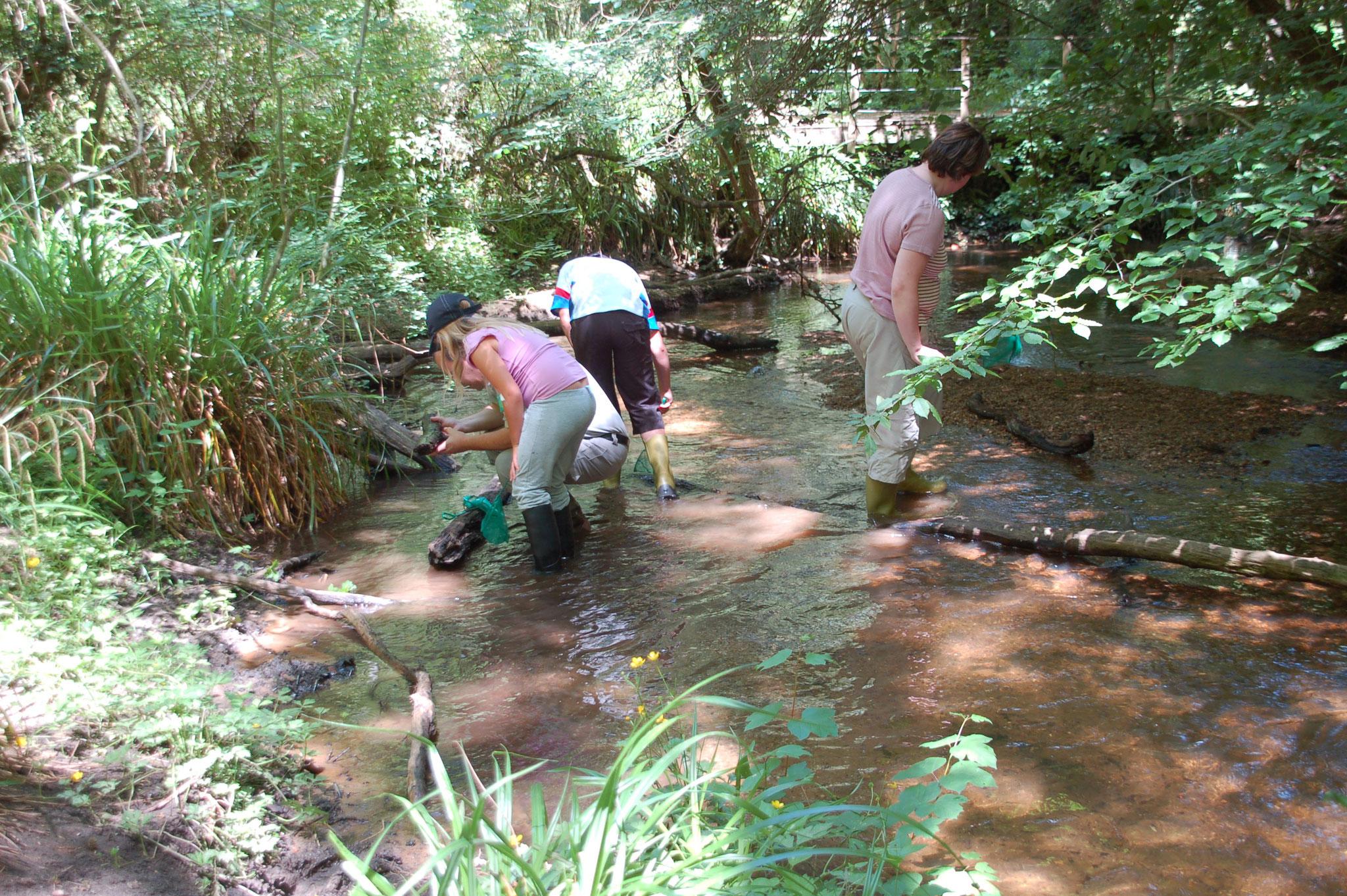 pêche et identification des animaux de la rivière