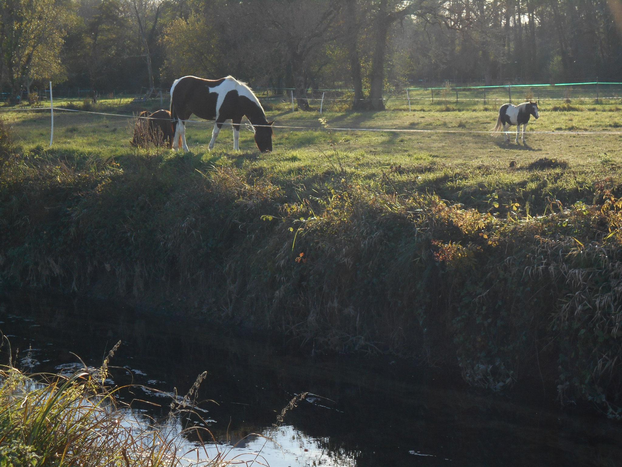 Les chevaux font partie du bocage humide d'isle-saint georges. Dessiner ces paysages à l'aide d'un transparent