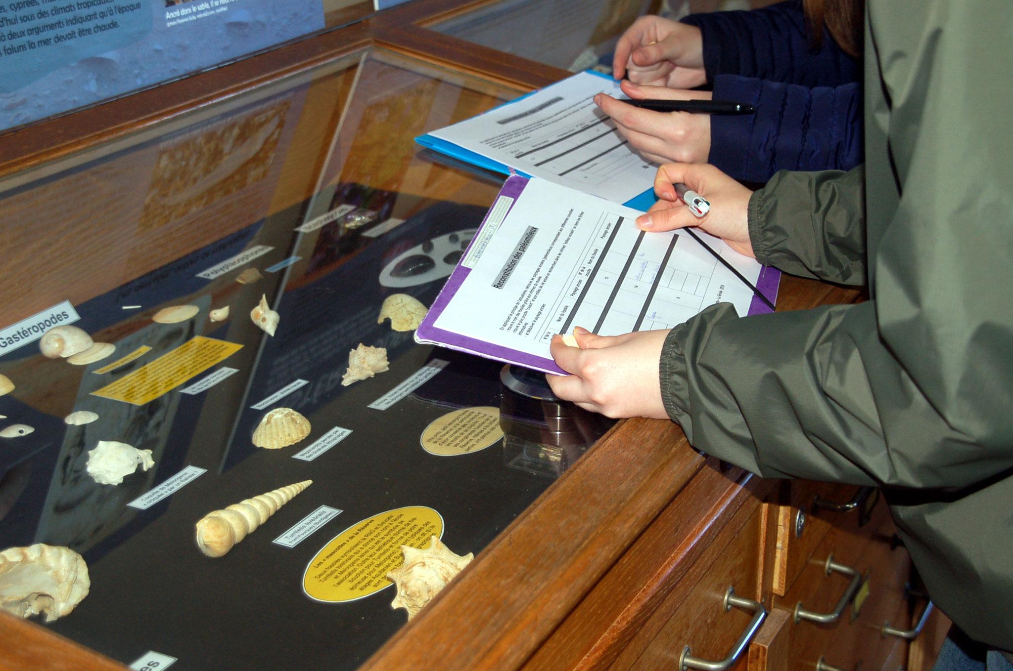 Détermination de fossiles dans le musée