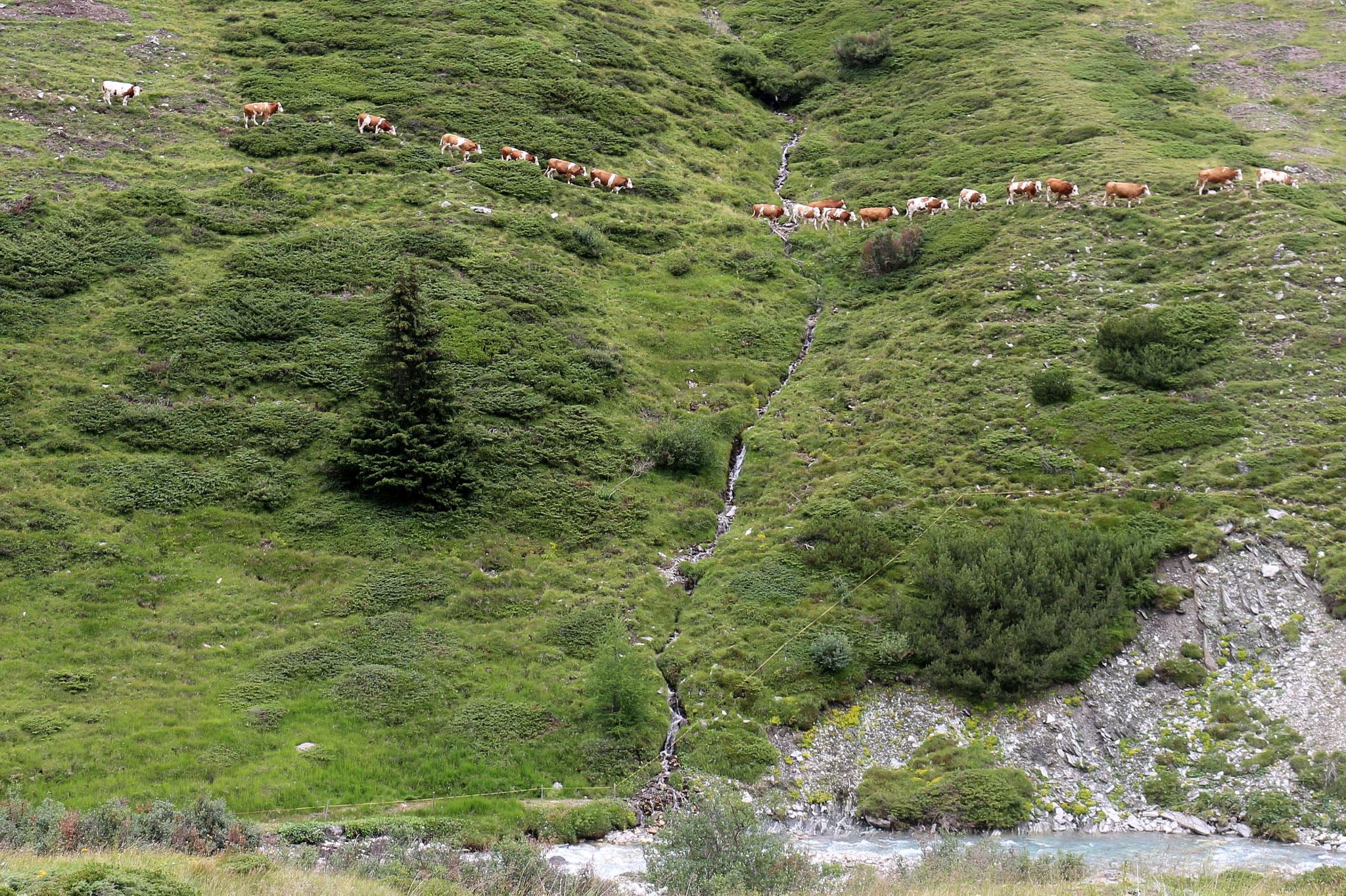Jagdhausalm, Defreggental, Osttirol