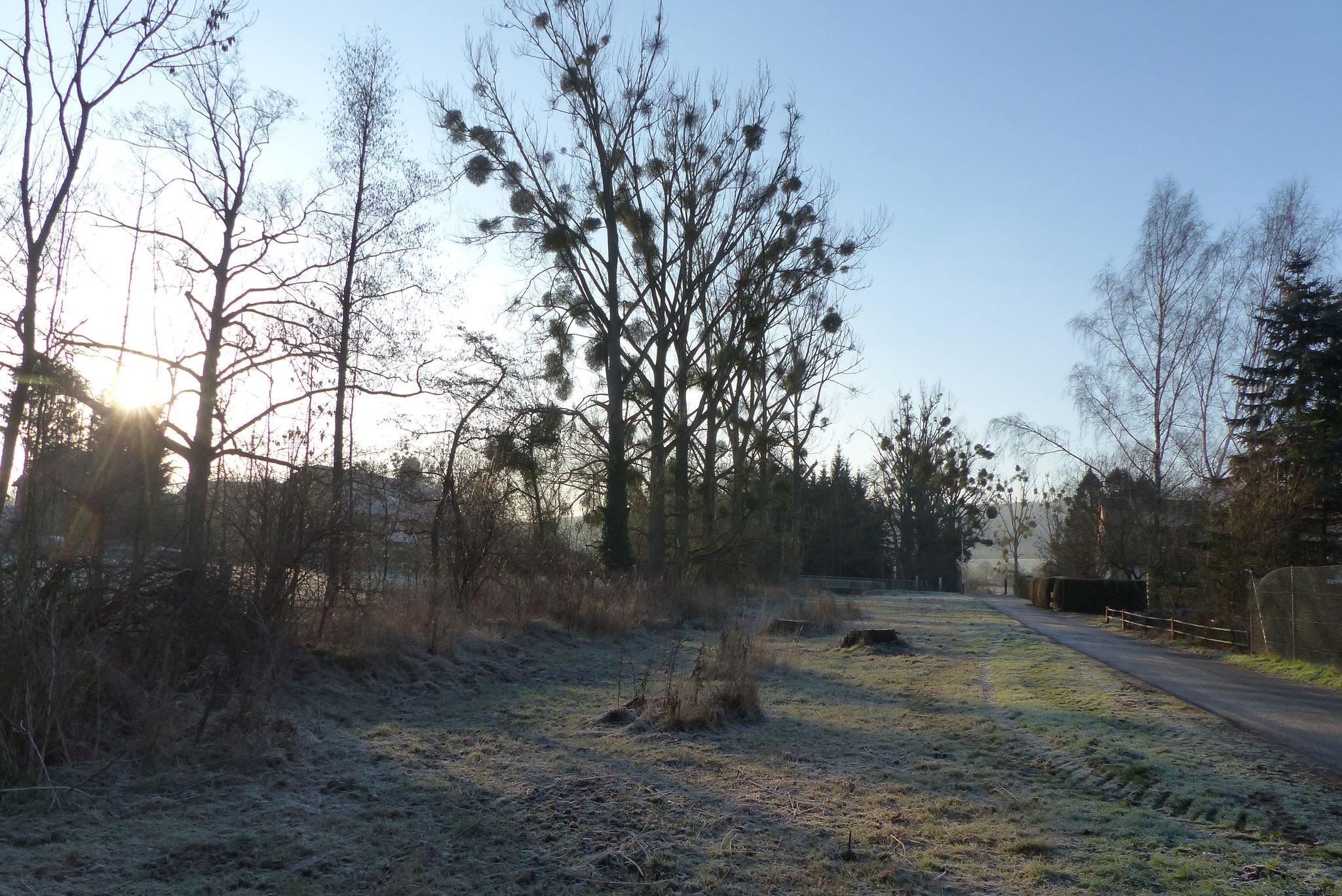 Aue-Wiese im Winter 2018/19 (Foto: M. Wolschke)