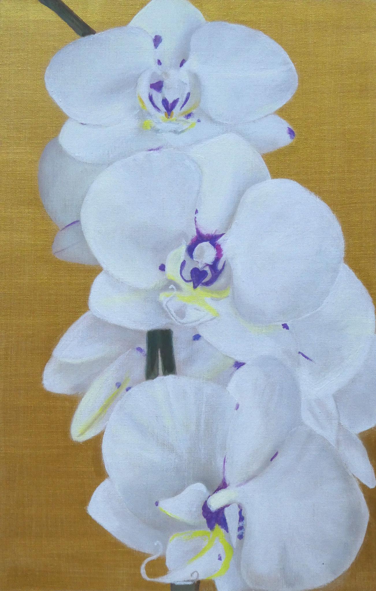 Orchideen auf Gold (3) (40 x 60)
