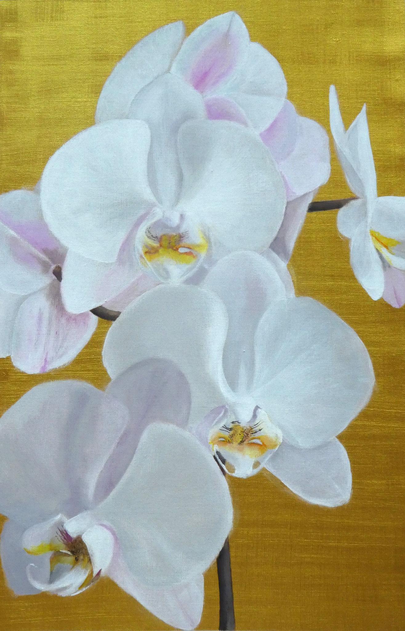 Orchideen auf Gold (5) (40 x 60)