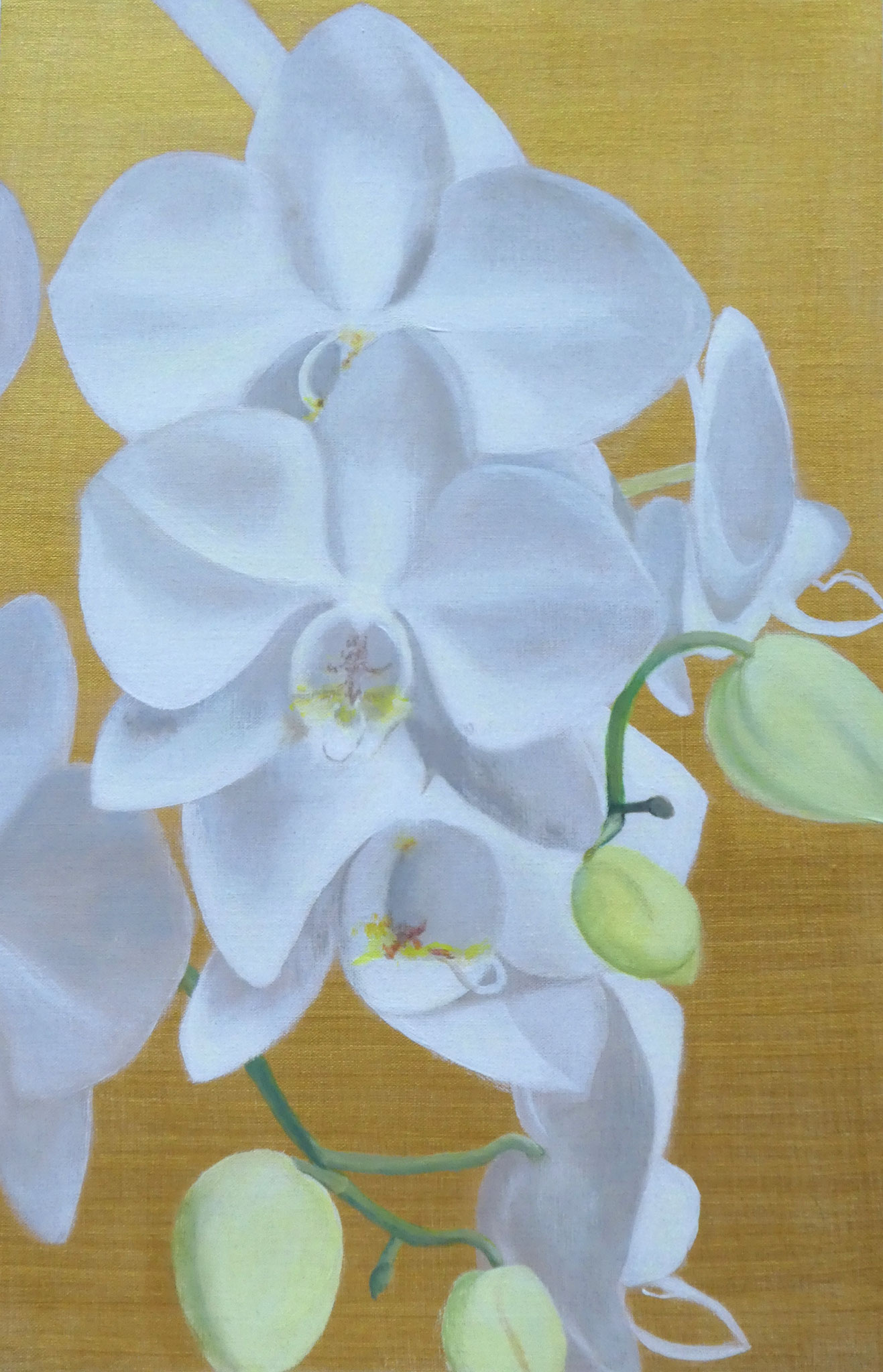 Orchideen auf Gold (2) (40 x 60)
