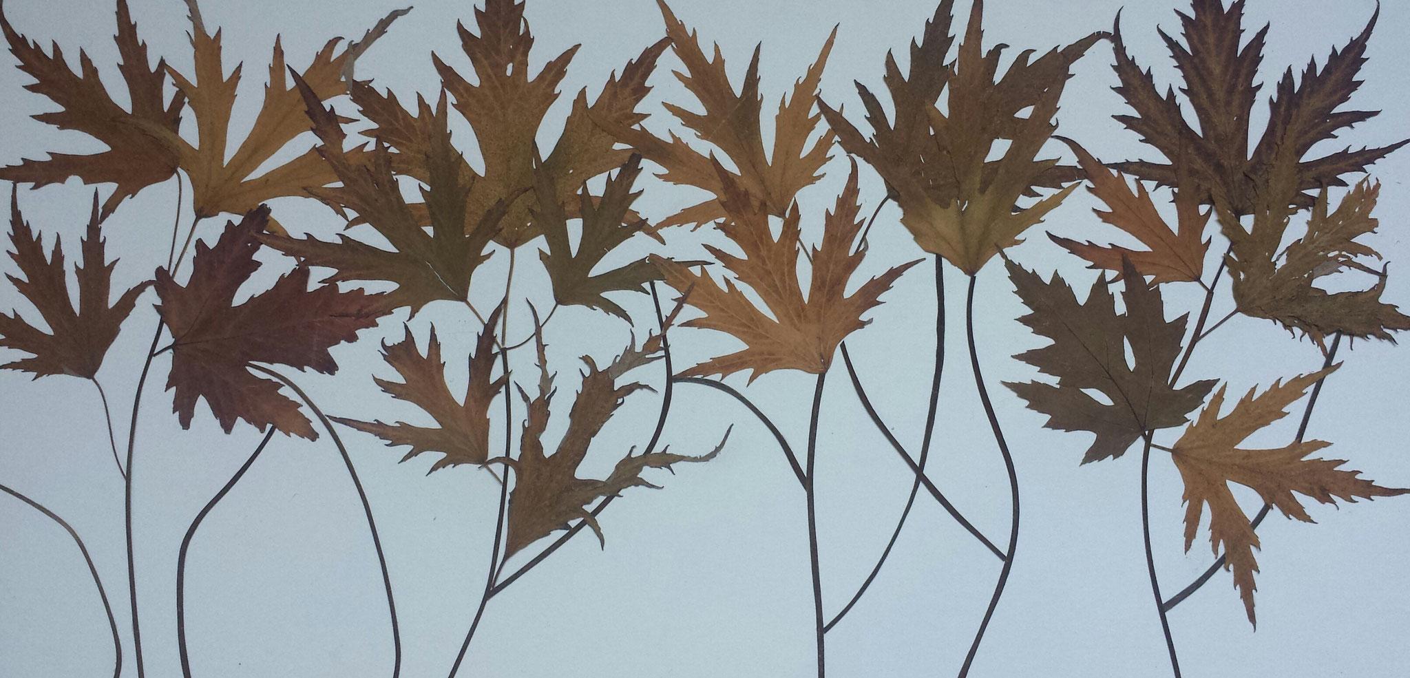 Bosque de hojas. 50x25cm.