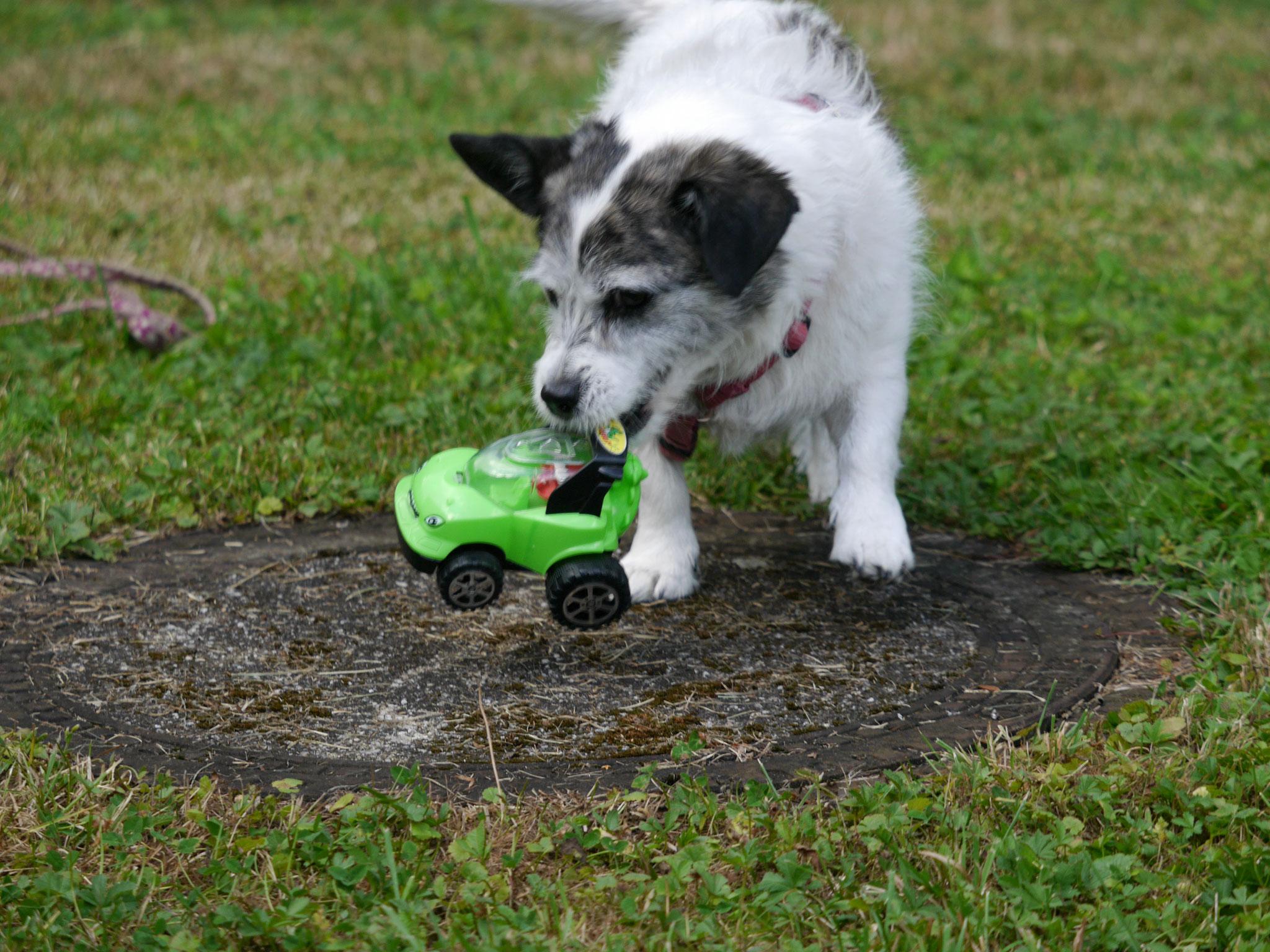 Jollie und das kleine Auto, ein Team
