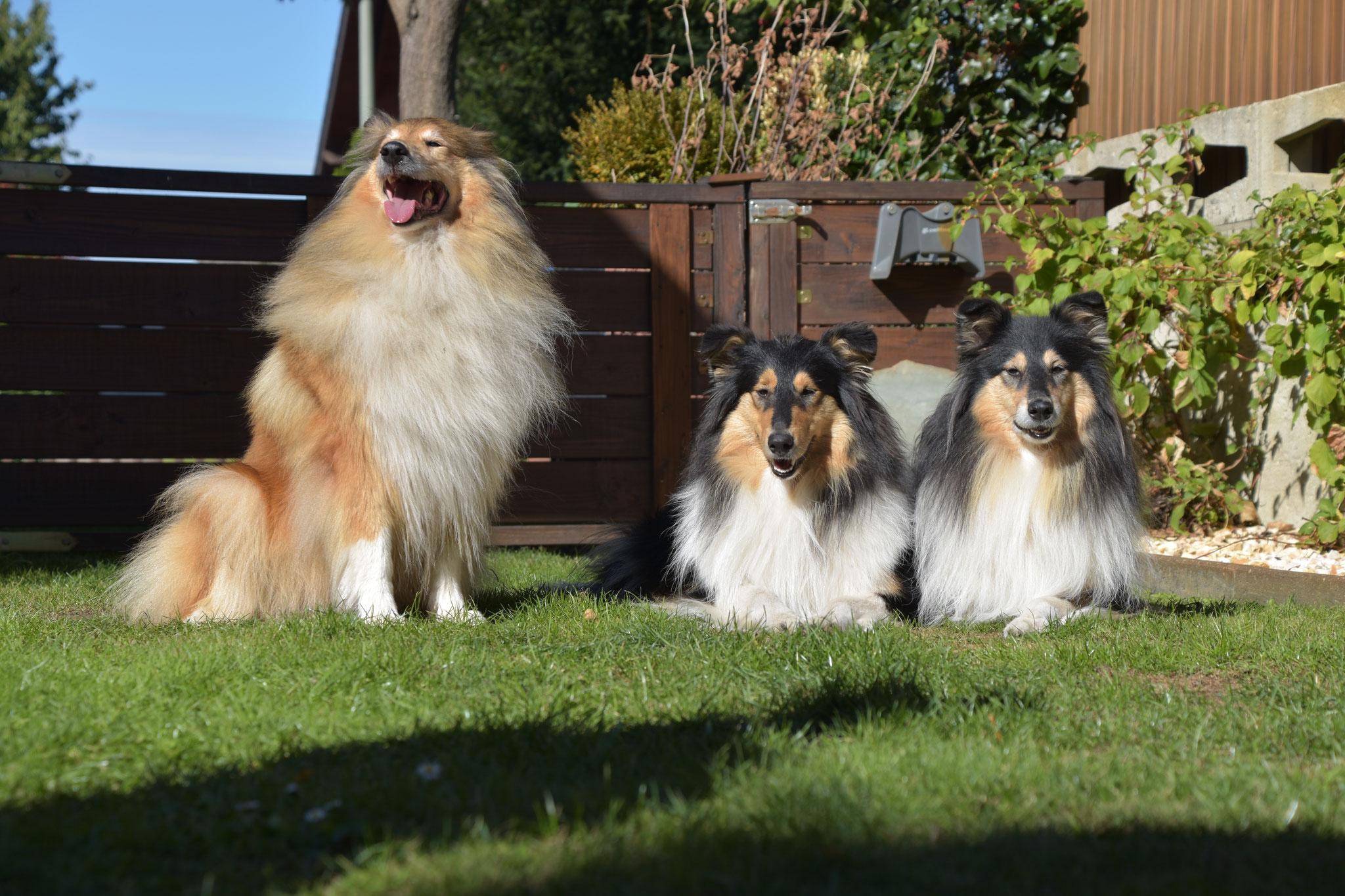 Aimee , Emba und Coco