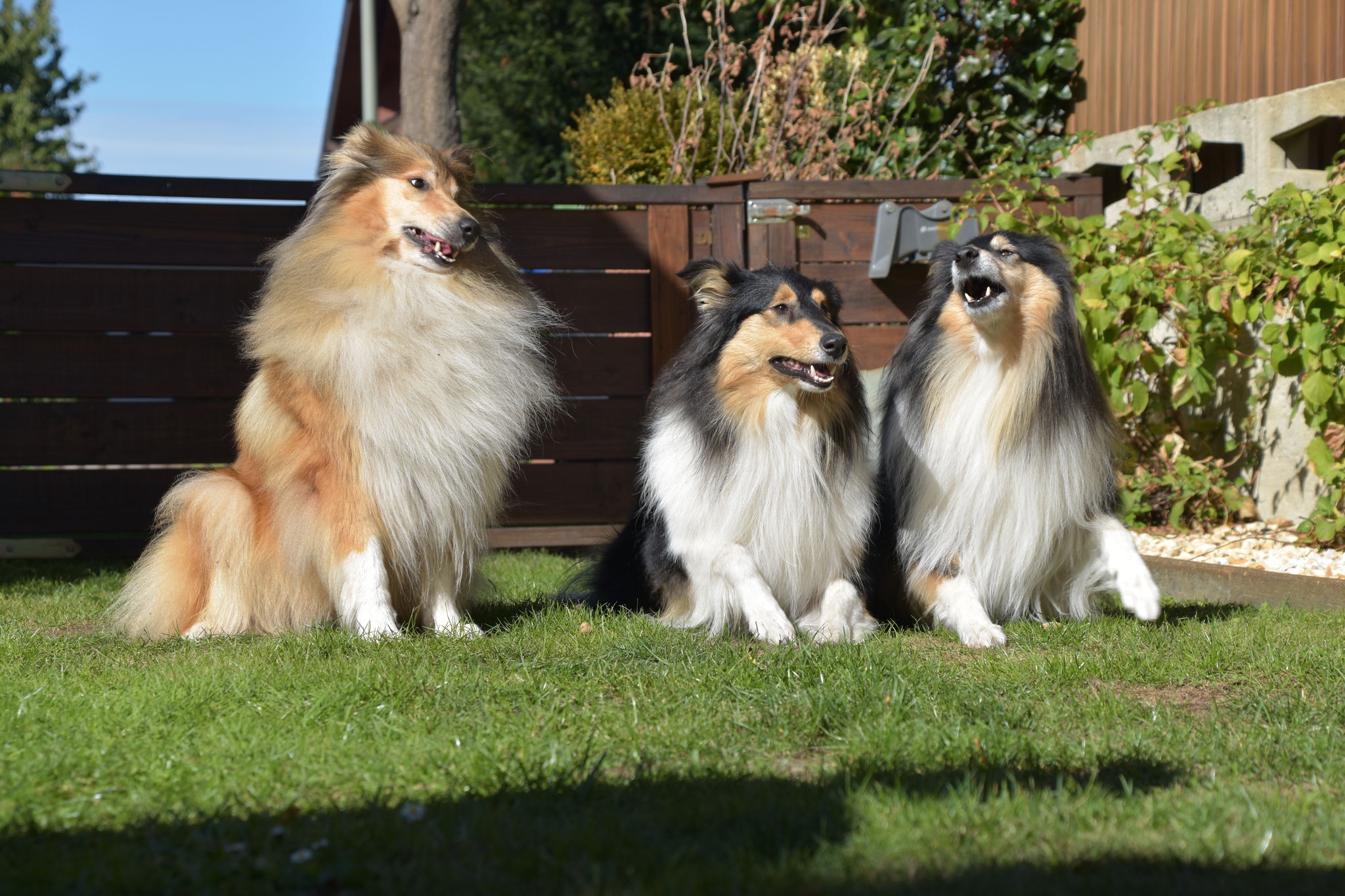 Aimee, Emba und Coco