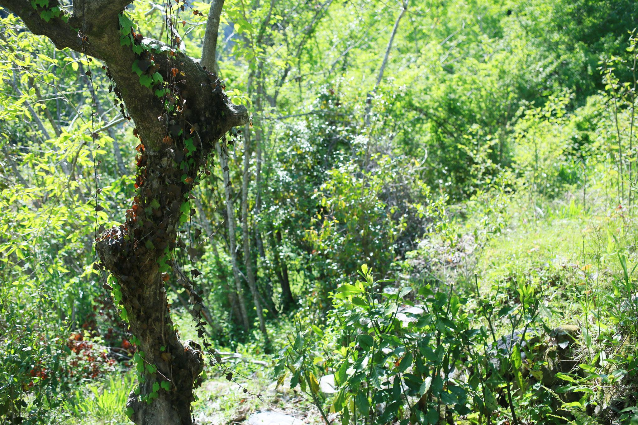 癒しの木工ギャラリー周辺の草むら
