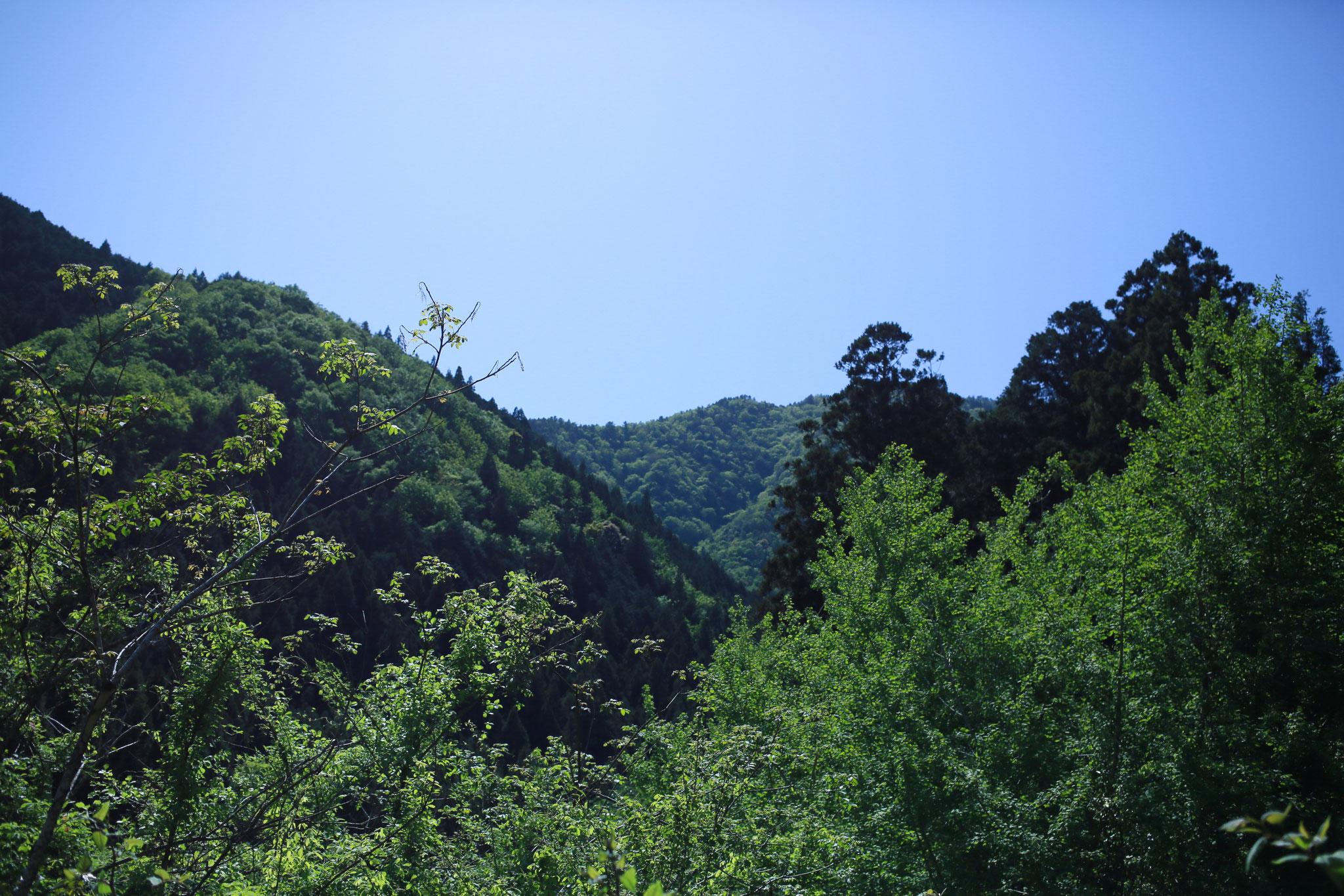 癒しの木工ギャラリーから見る山々