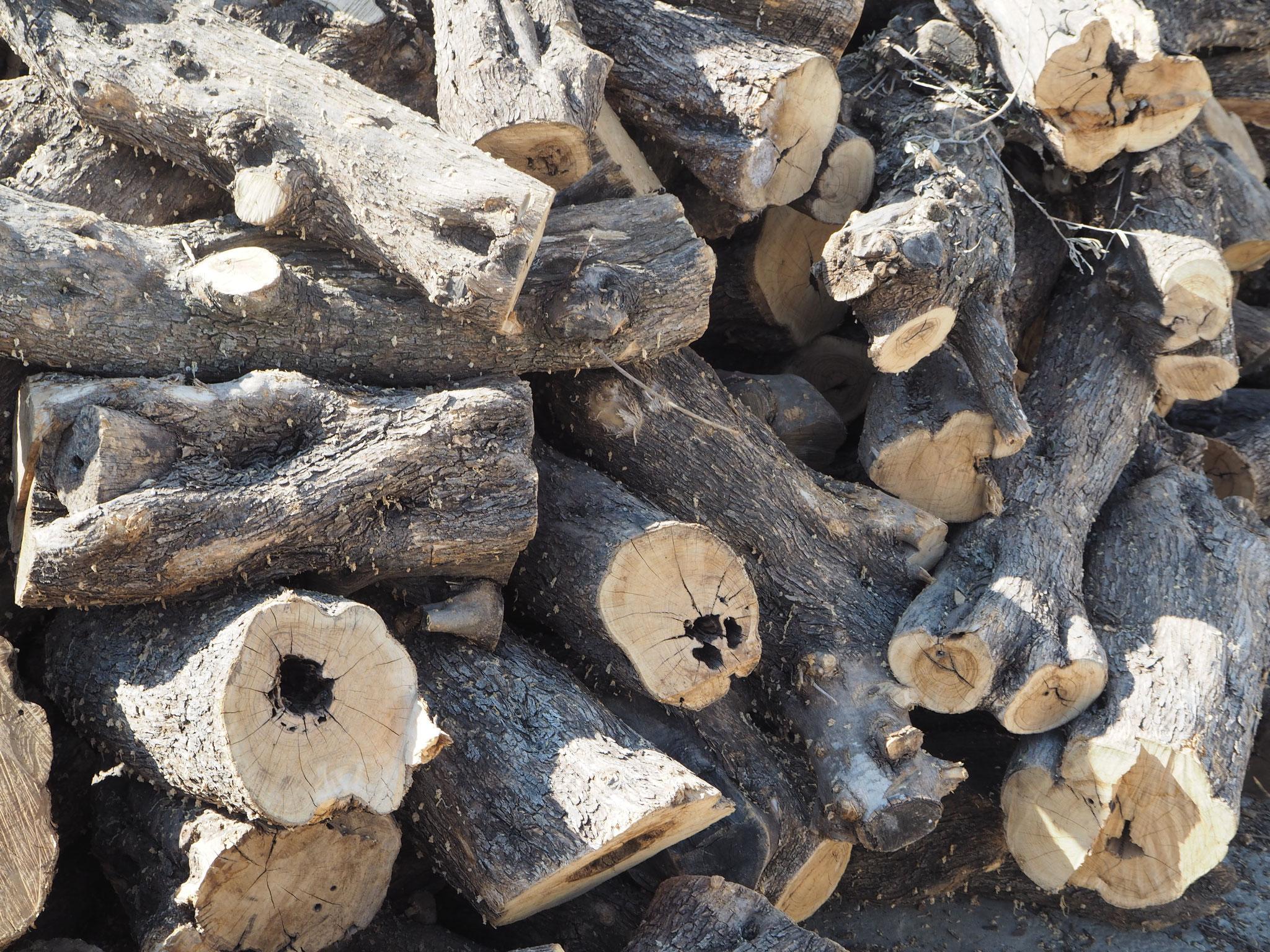 Bevor das Olivenholz bearbeitet werden kann muß es trocknen