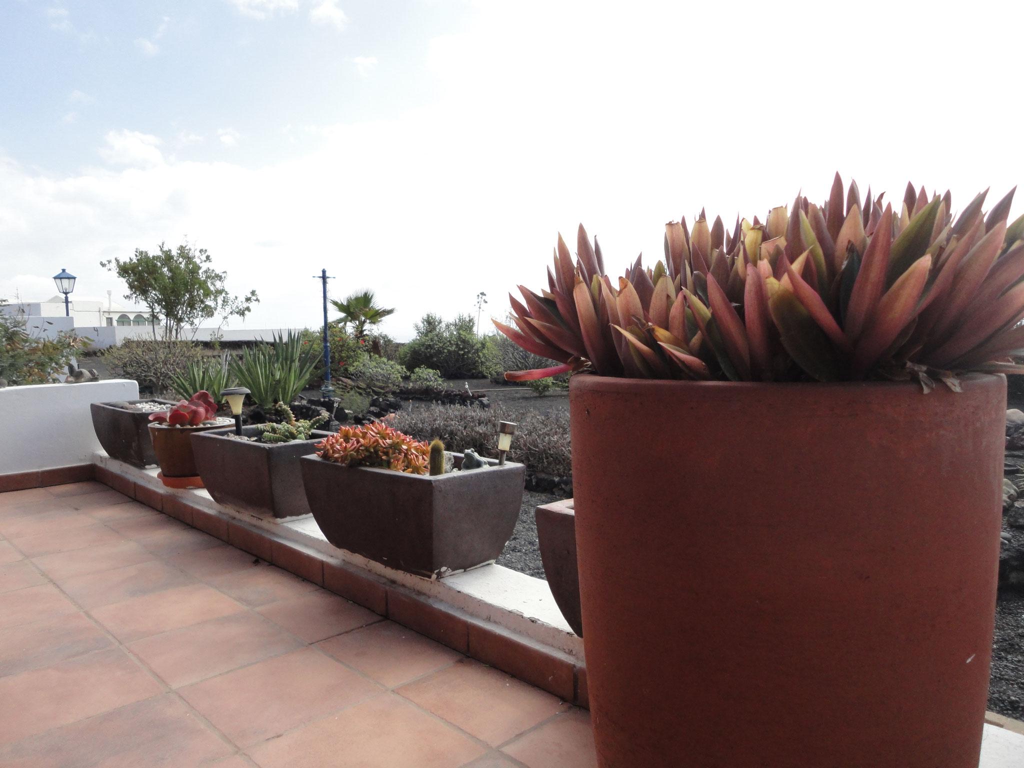 Views across the Indigenous garden