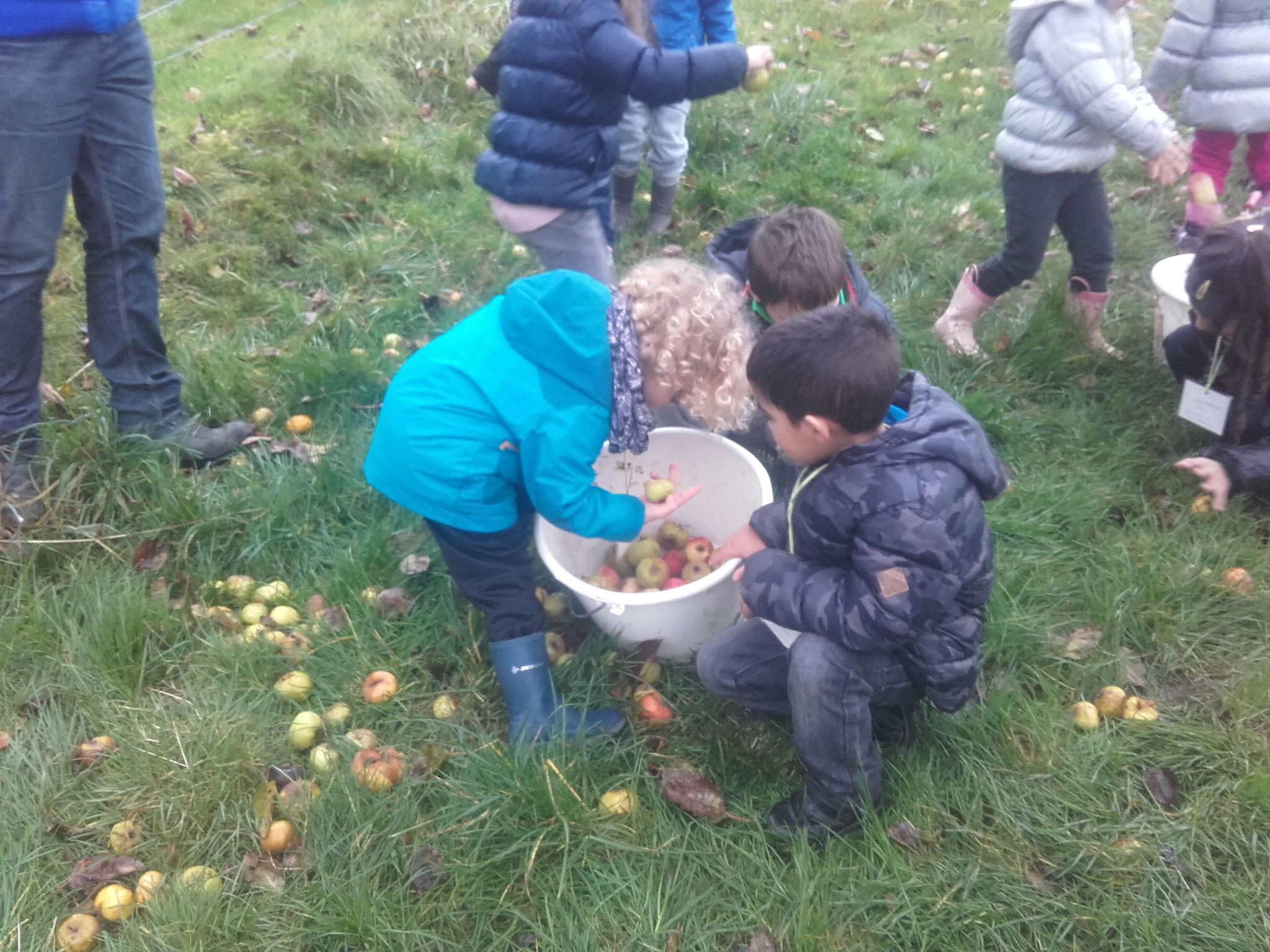 atelier jus de pommes