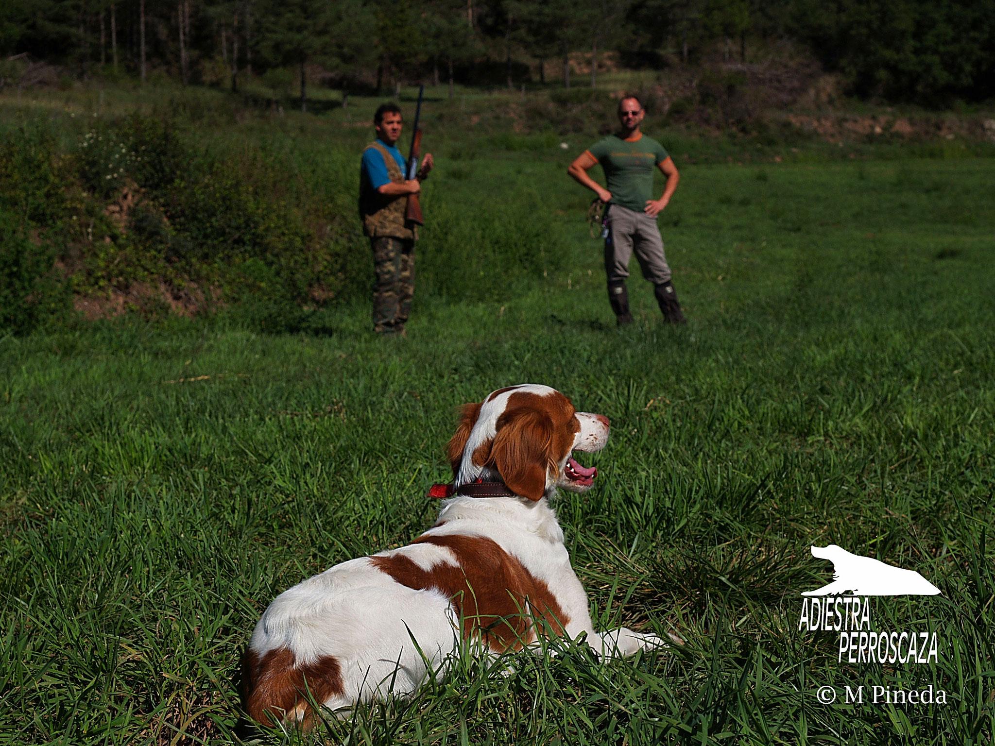 Obediencia basica en el perro de caza
