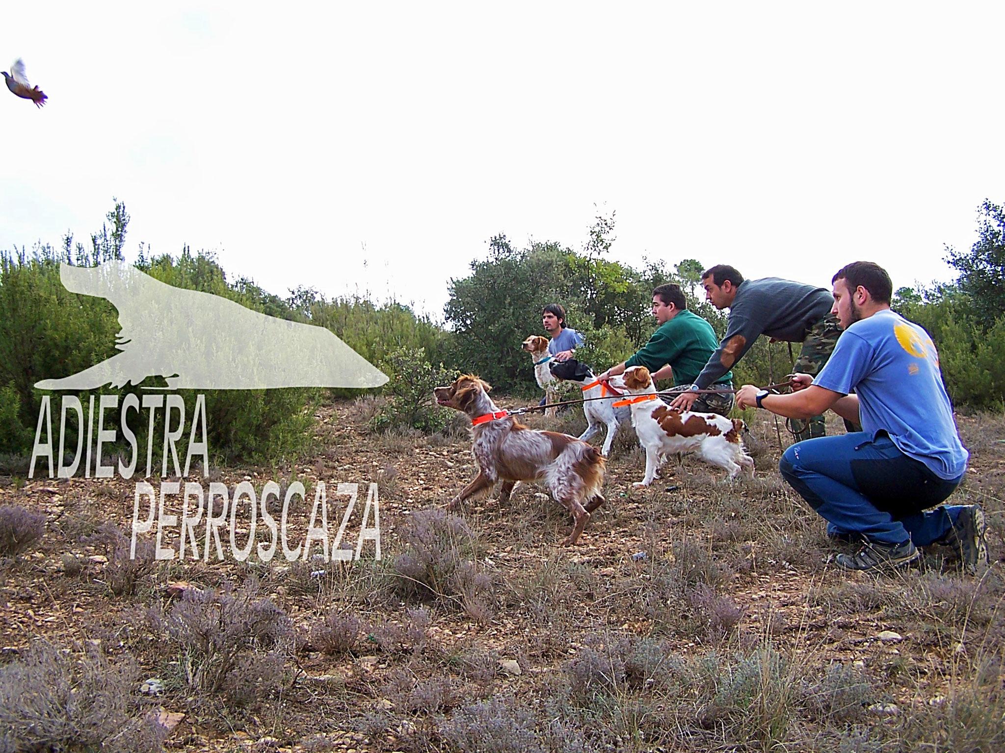 respeto a vuelo del perro de caza