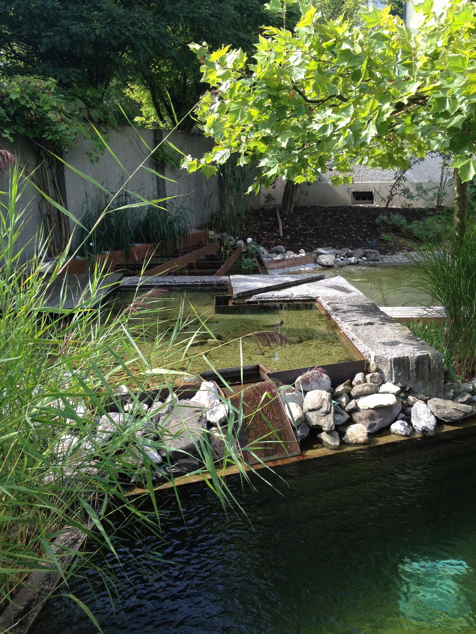 Wassergarten in Zollikon