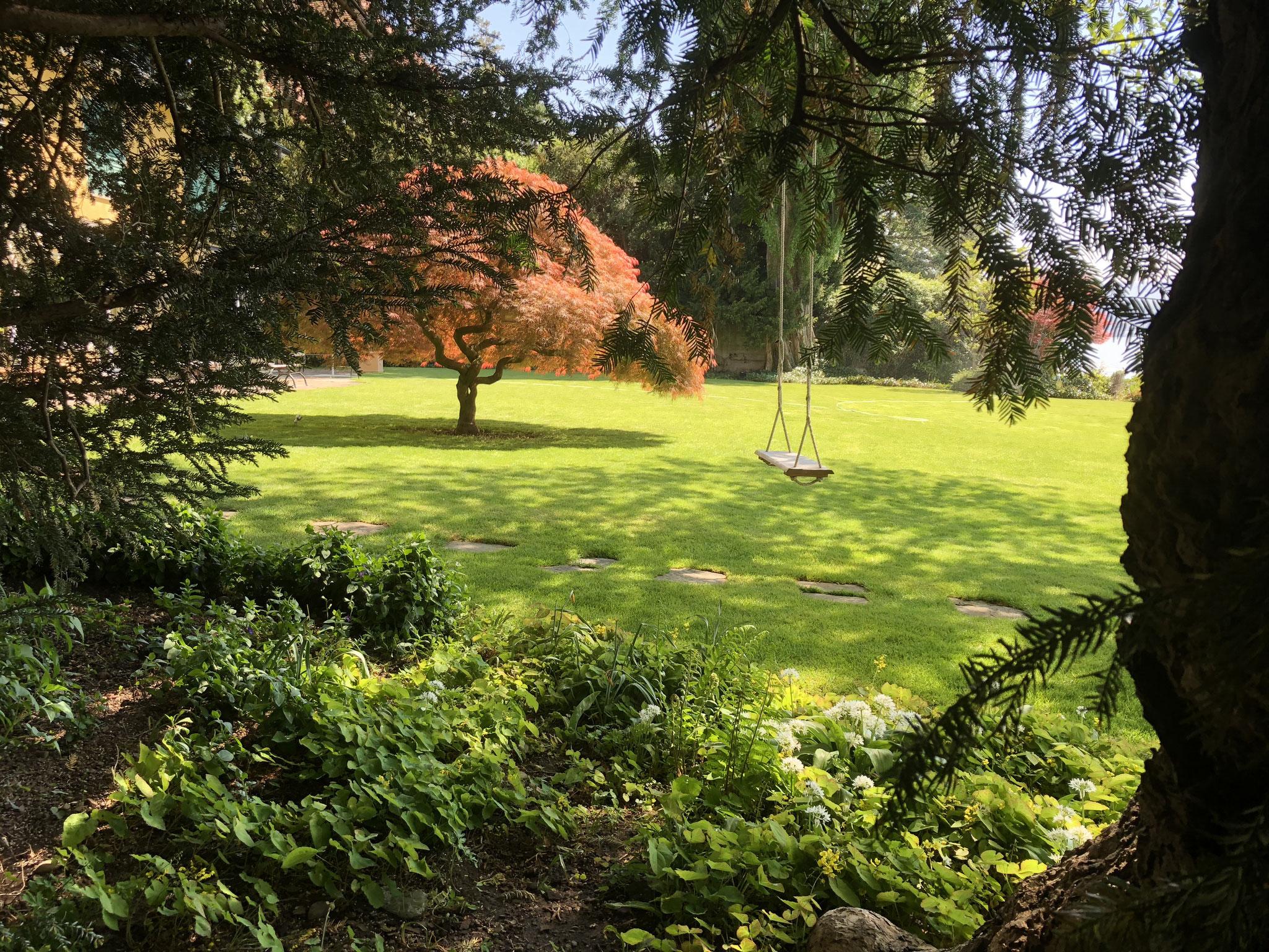 Garten Japanischer Ahorn Zollikon