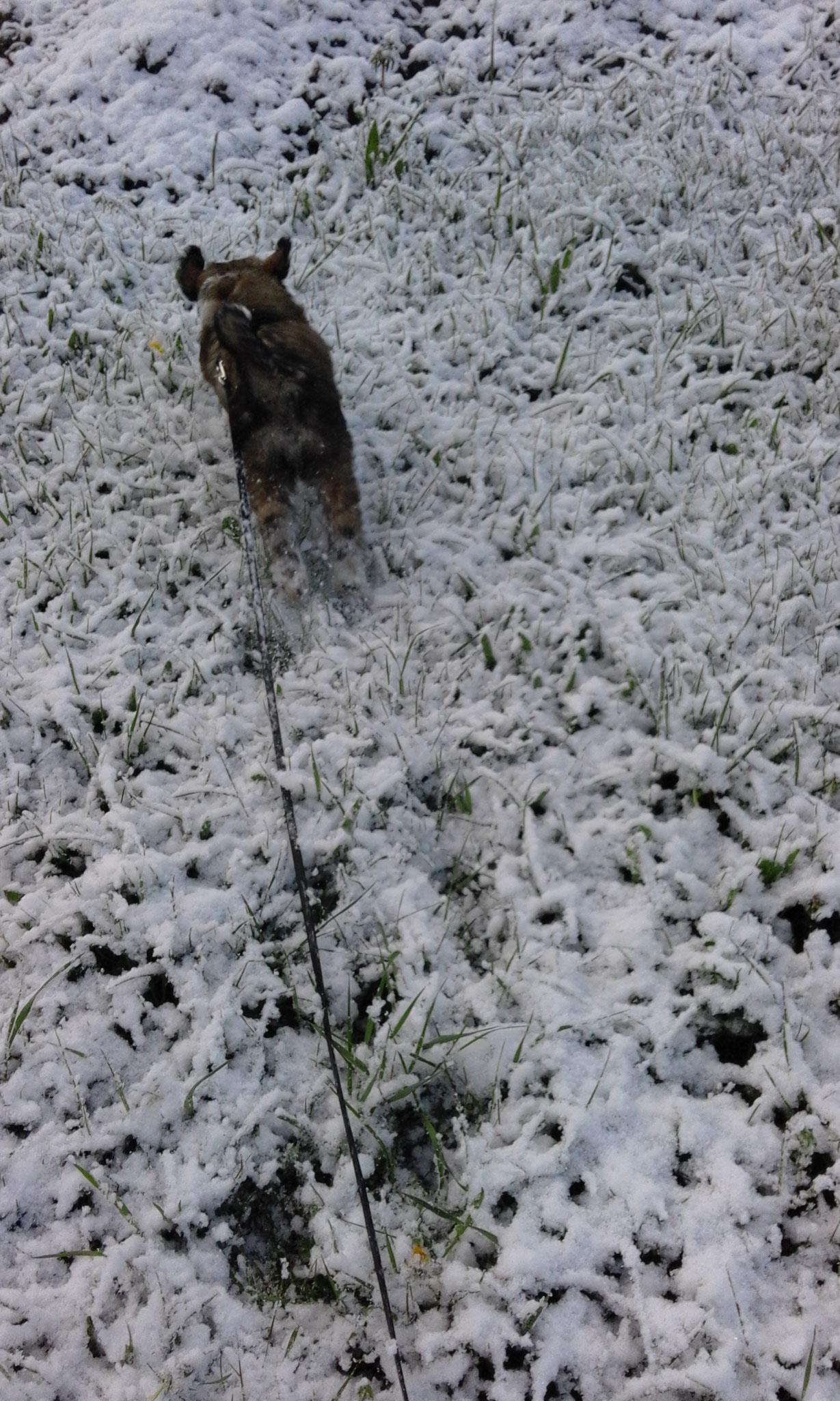 brrr Schnee, na, dann haben die Kleinen den wenigstens auch