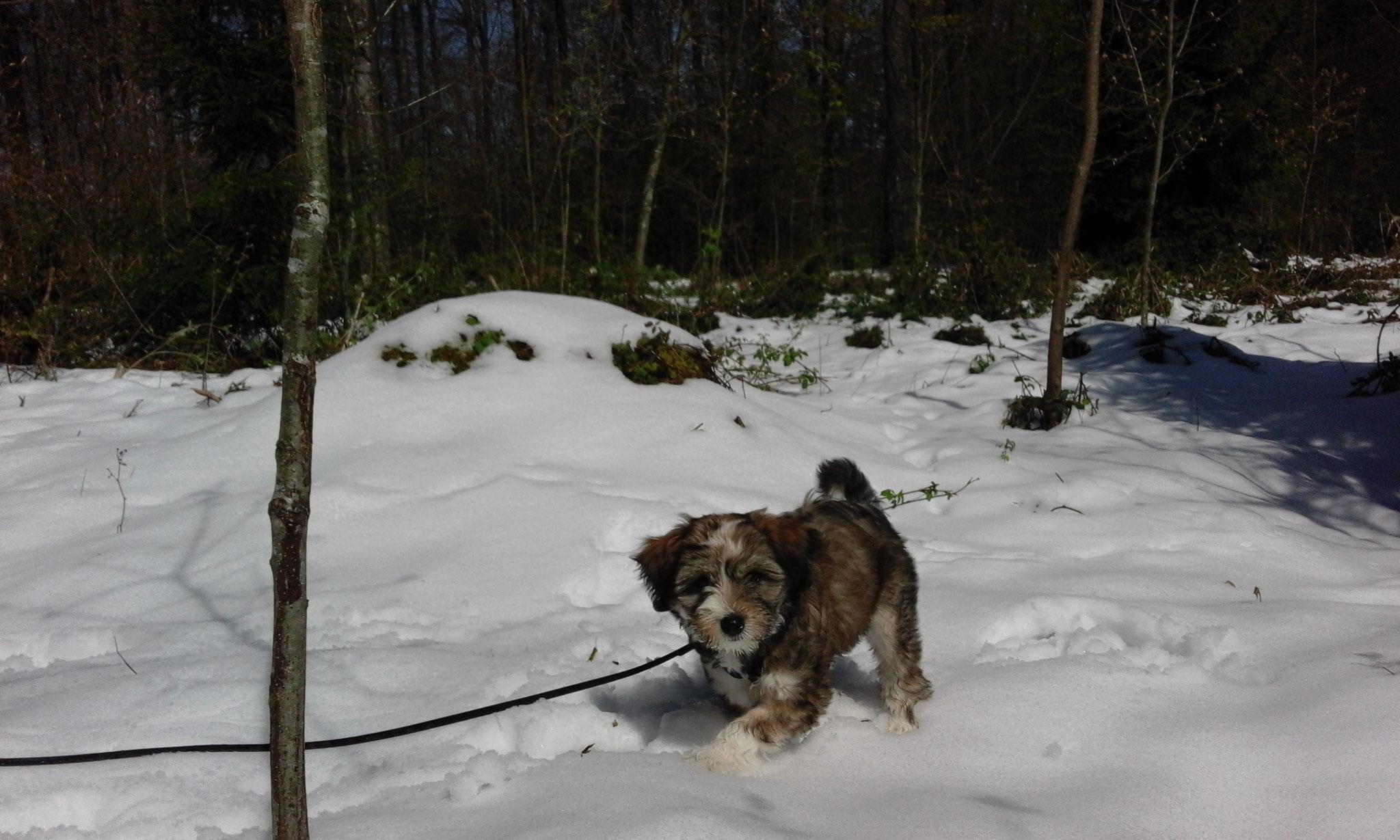 der Schnee nimmt am Bodensee kein Ende...dafür gibts keine Zecken..lach