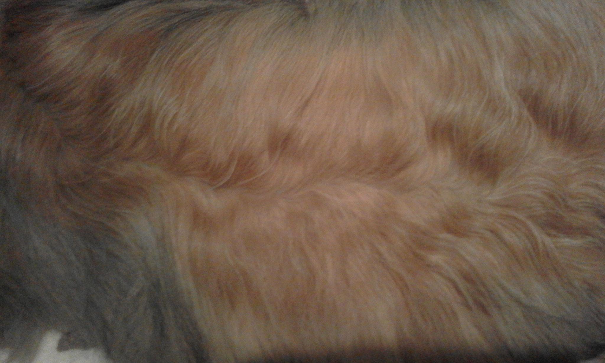 oooohh schaut euch mal das schöne Haar an, es wächst...