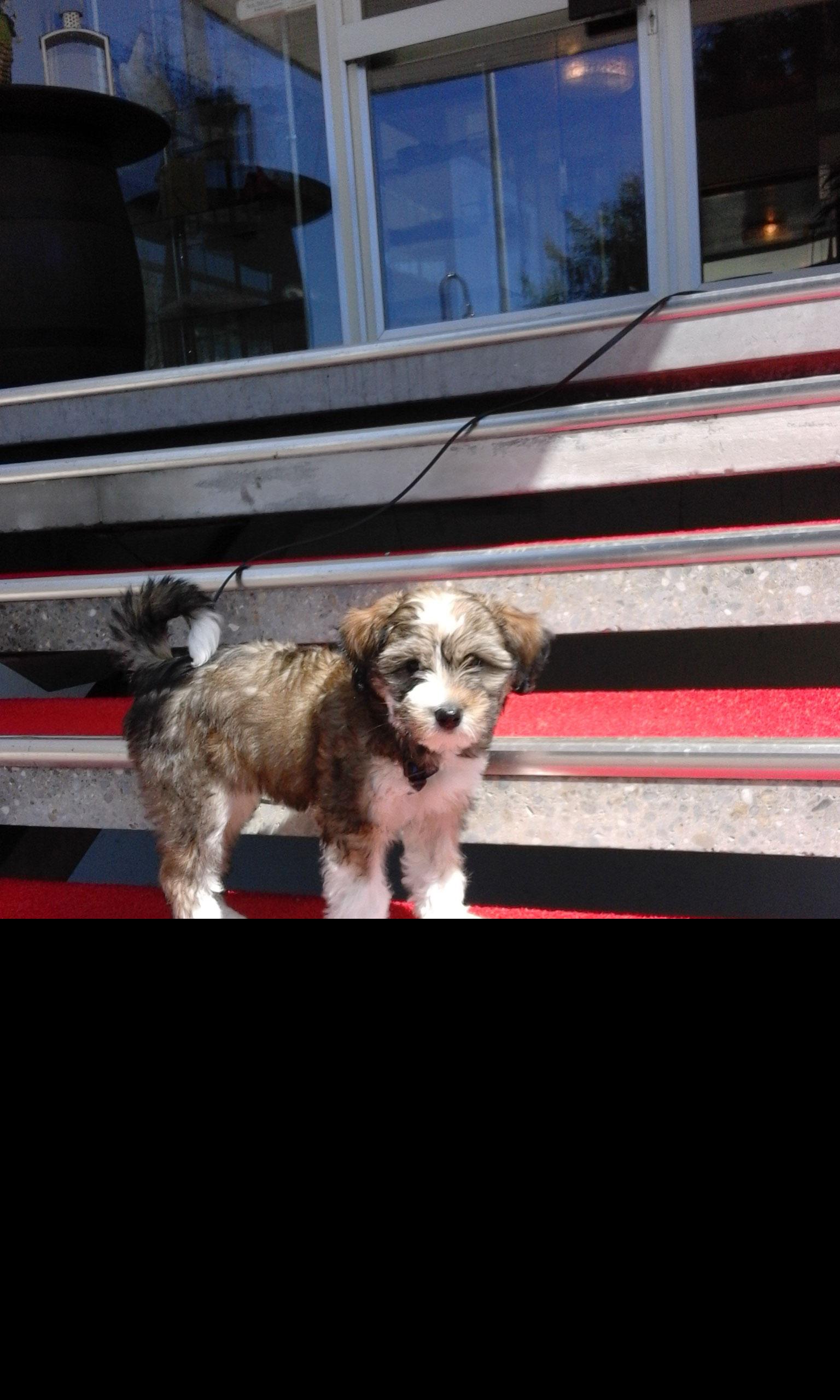 Restaurant durfte sie auch schon zeigen, dass sie brav sein kann..Hundegruppen lernt sie kennen, bravo!