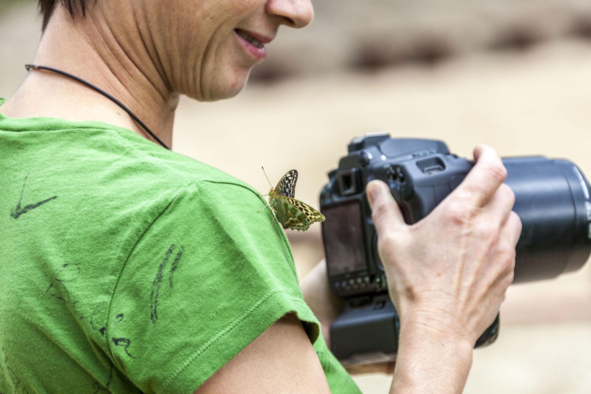 Auch Schmetterlinge mögen Schatzi!