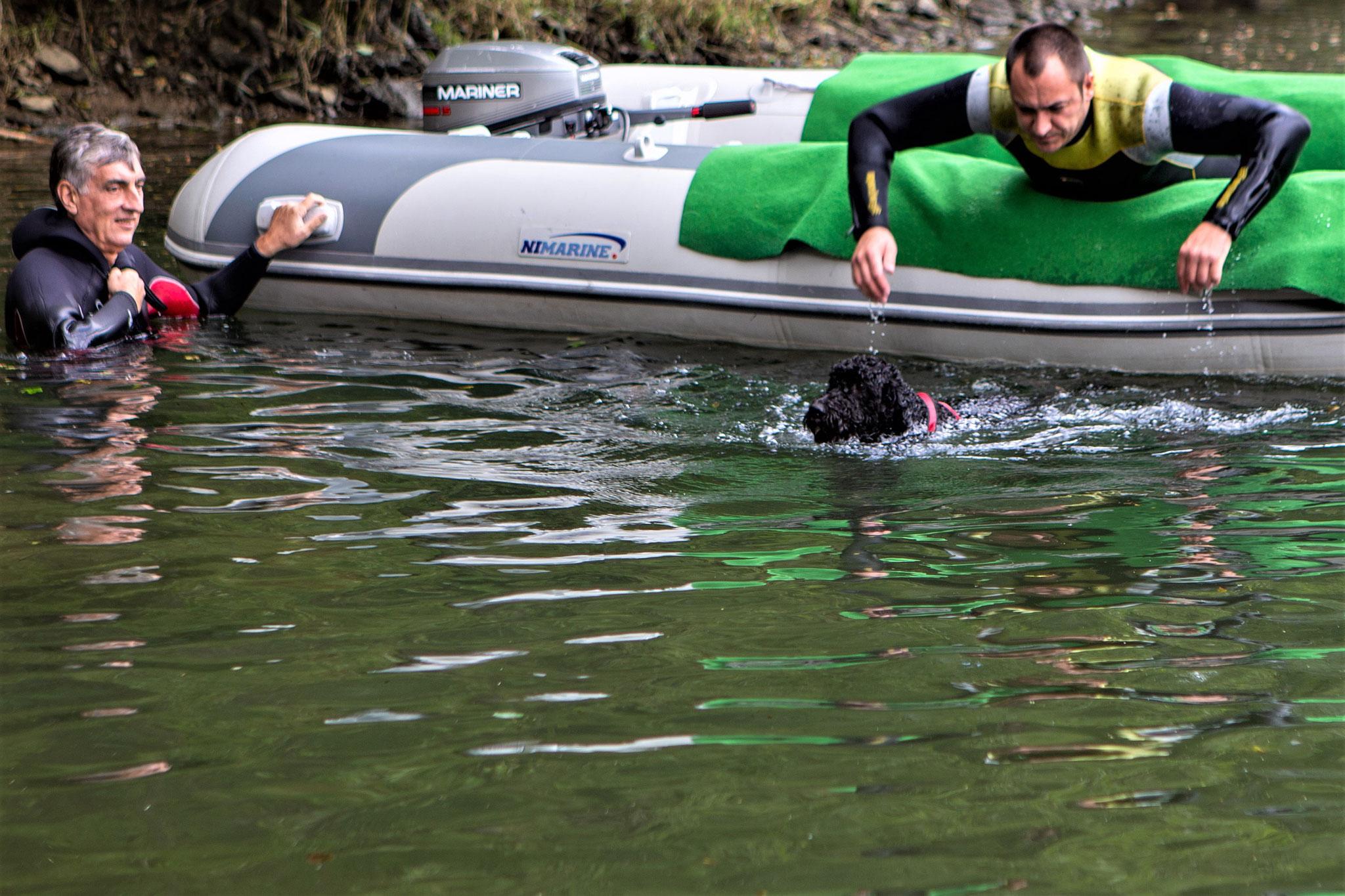Smilla, ein französischer Wasserhund, die aber wohl nicht wusste, dass sie Wasserhund im Rassestandard trägt!