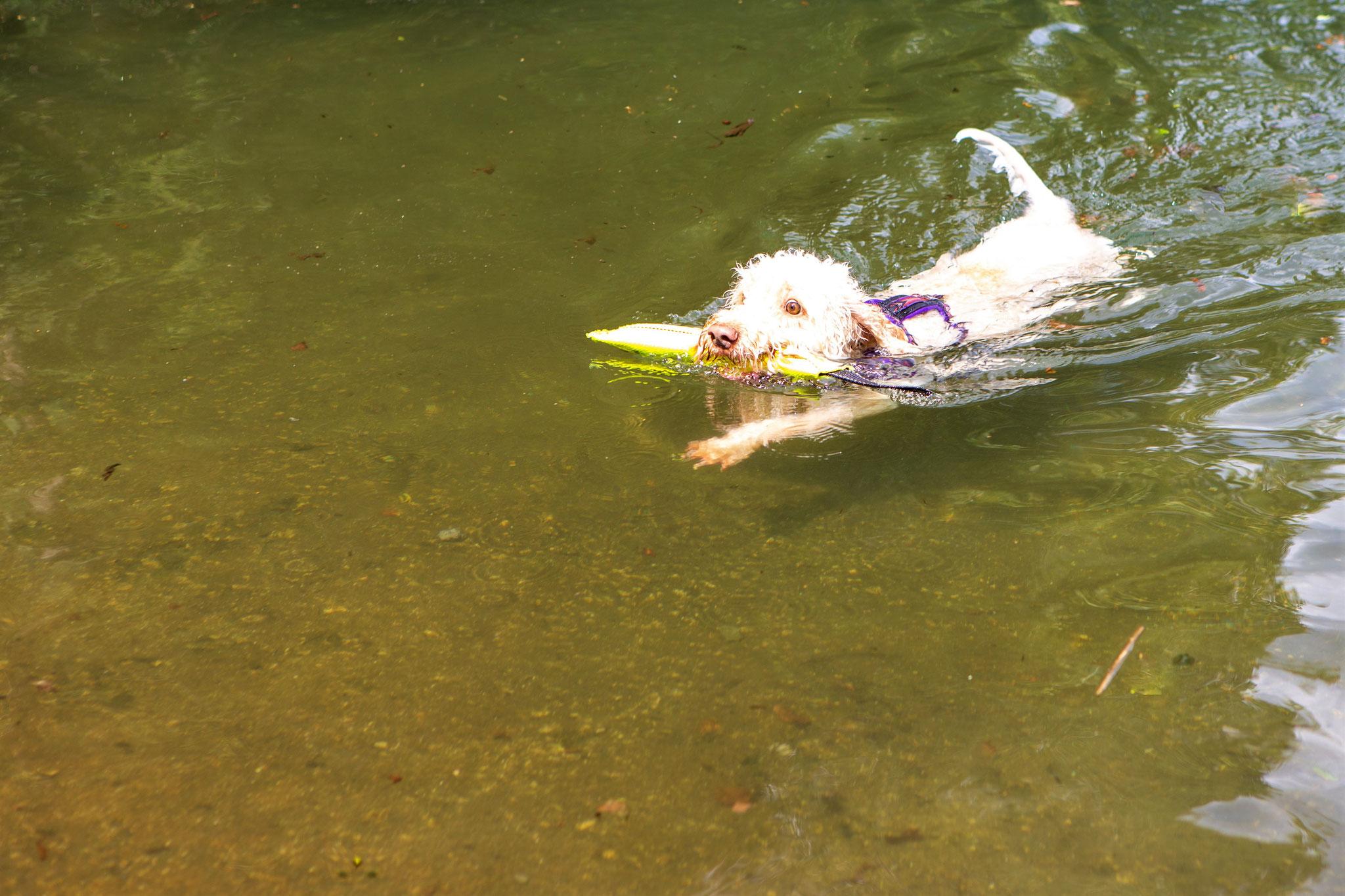 Lovelyn, eine Wasserratte