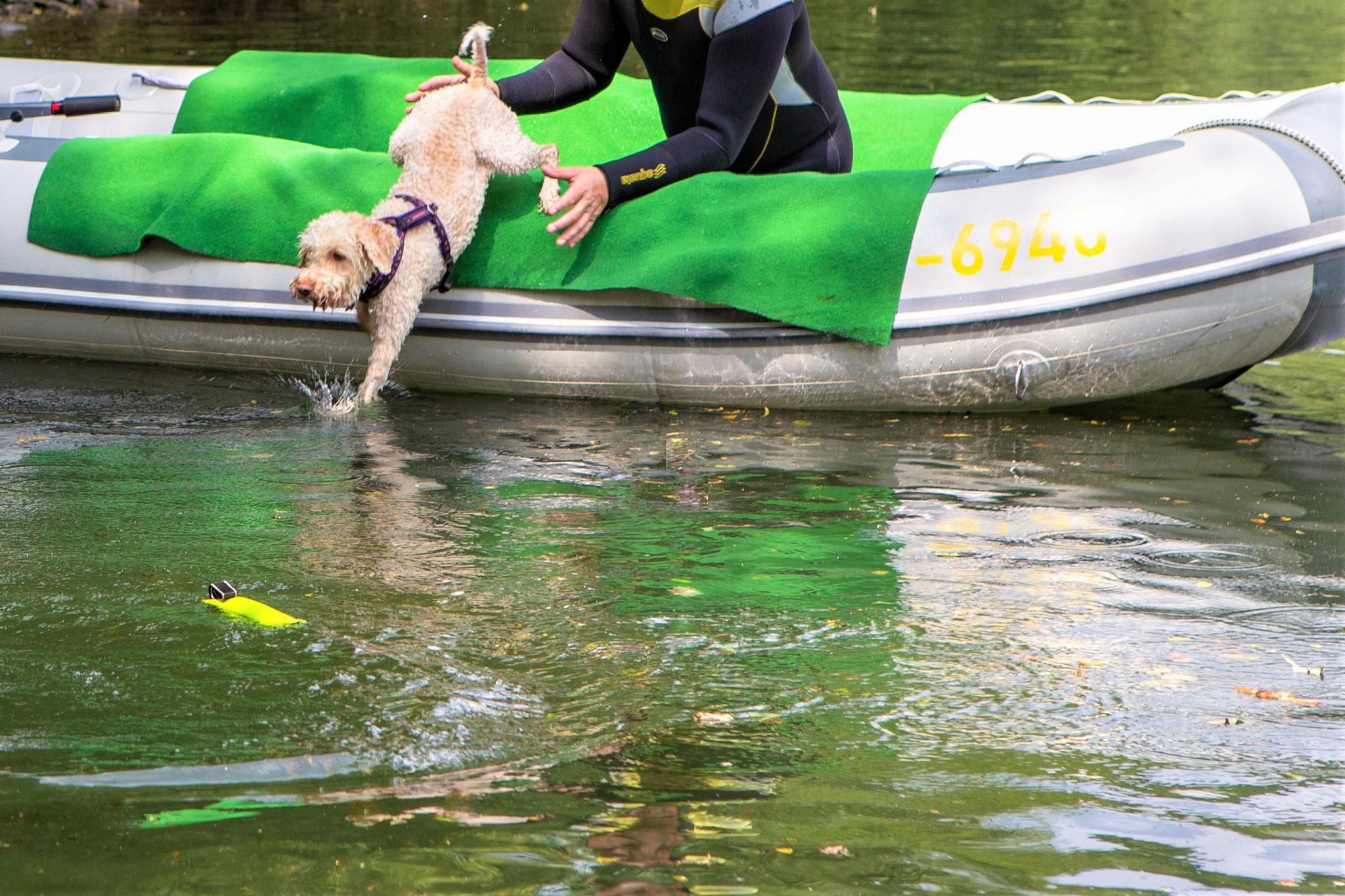 springt aus dem Boot ins Wasser.