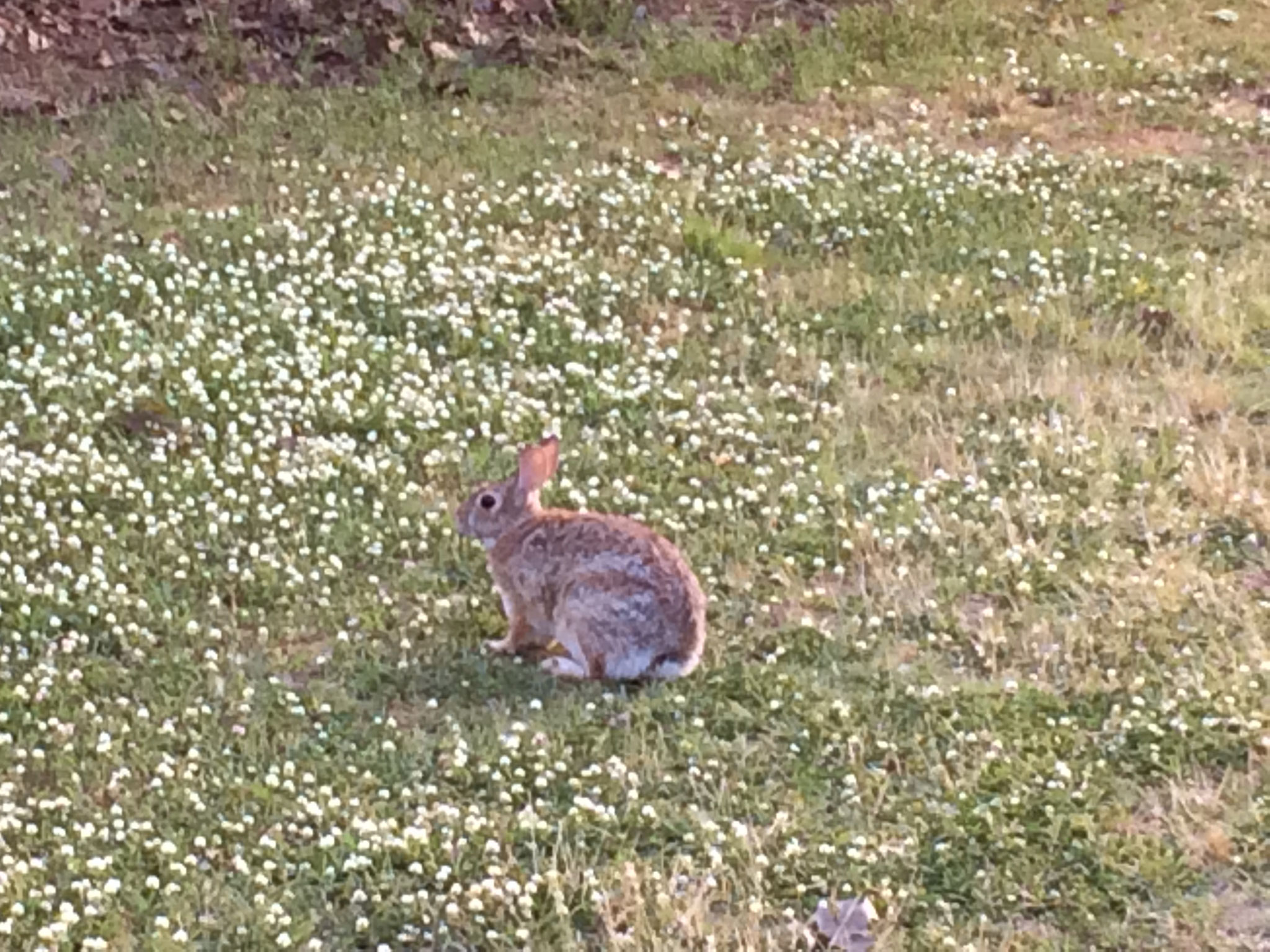 Und der Hase direkt am Spielfeldrand.