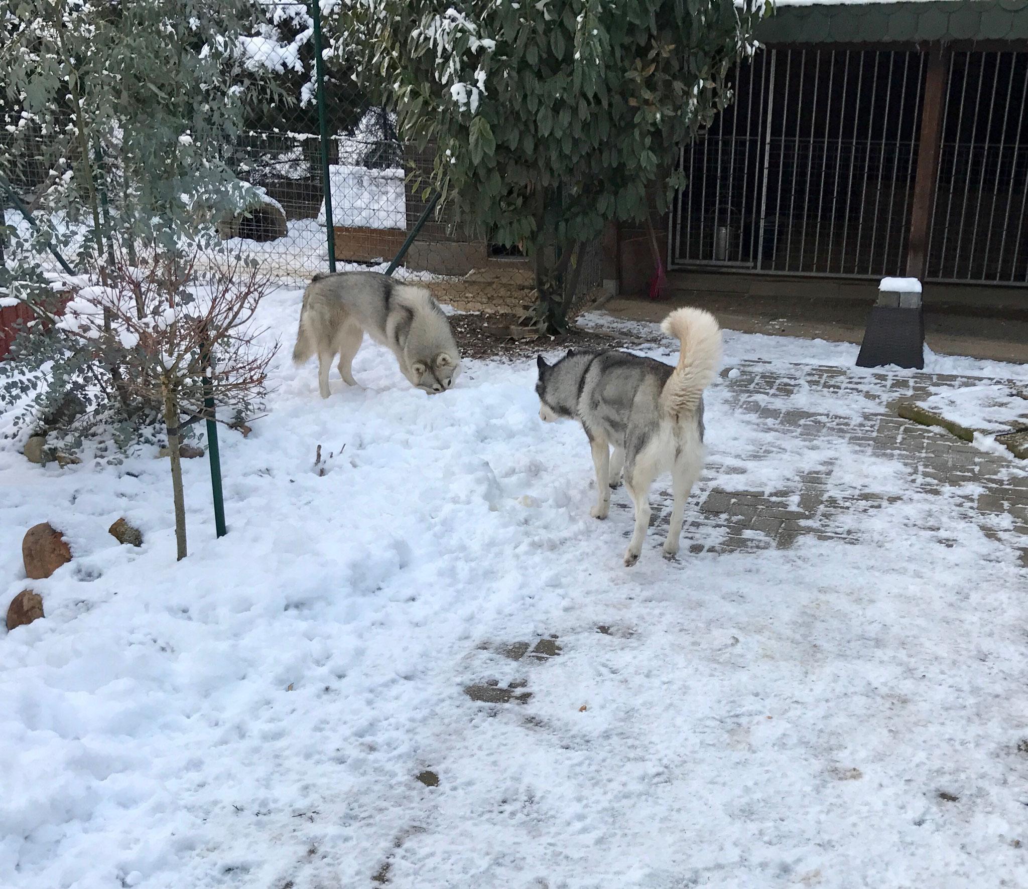 """Unsere ältere Dame """"Snow"""" und Ice"""
