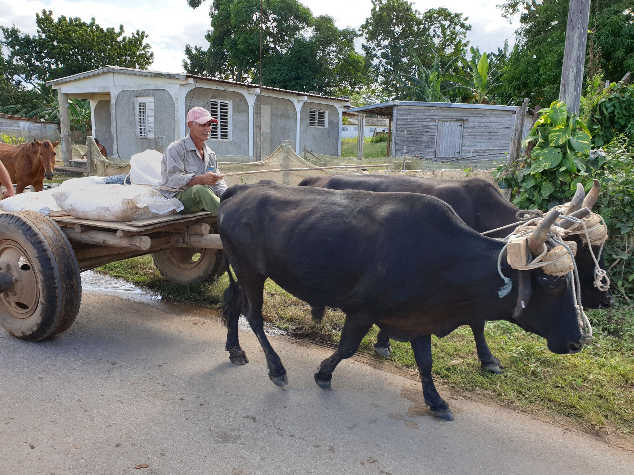 Kuba Tabakplantage bei San Juan Y Martinez