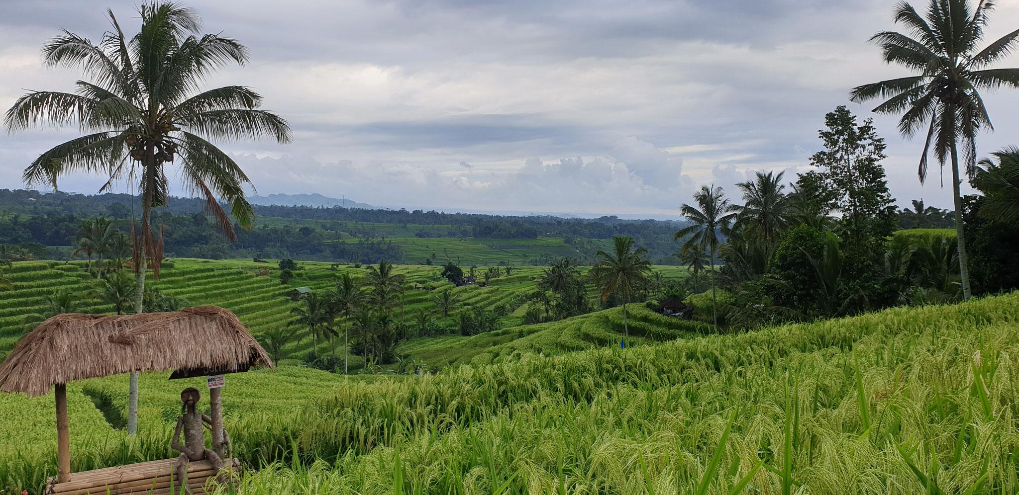 Reisfelder von Jatiluwih