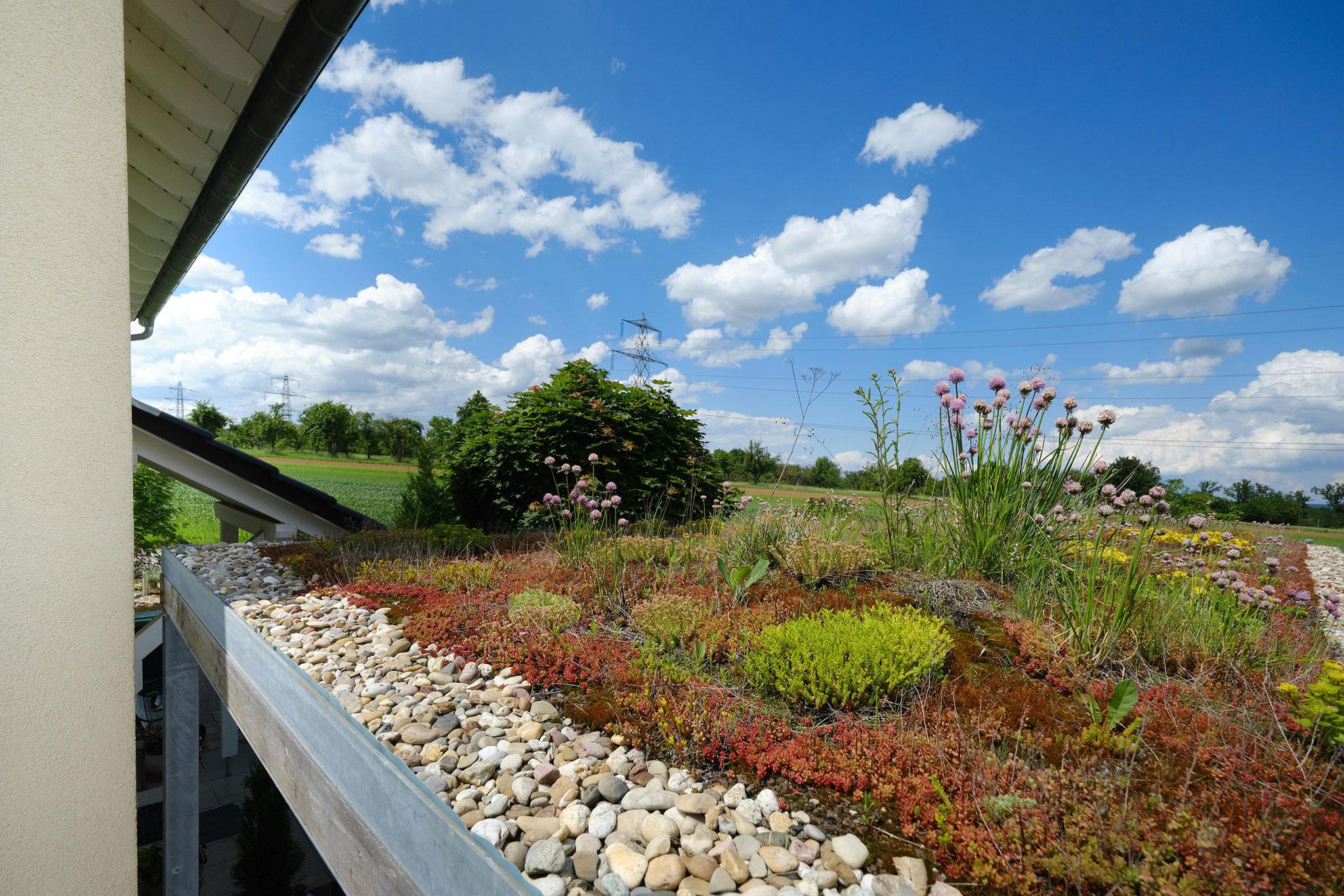 Individuell geplanter Carport mit Lamellenholzverkleidung und Extensivbegrünung