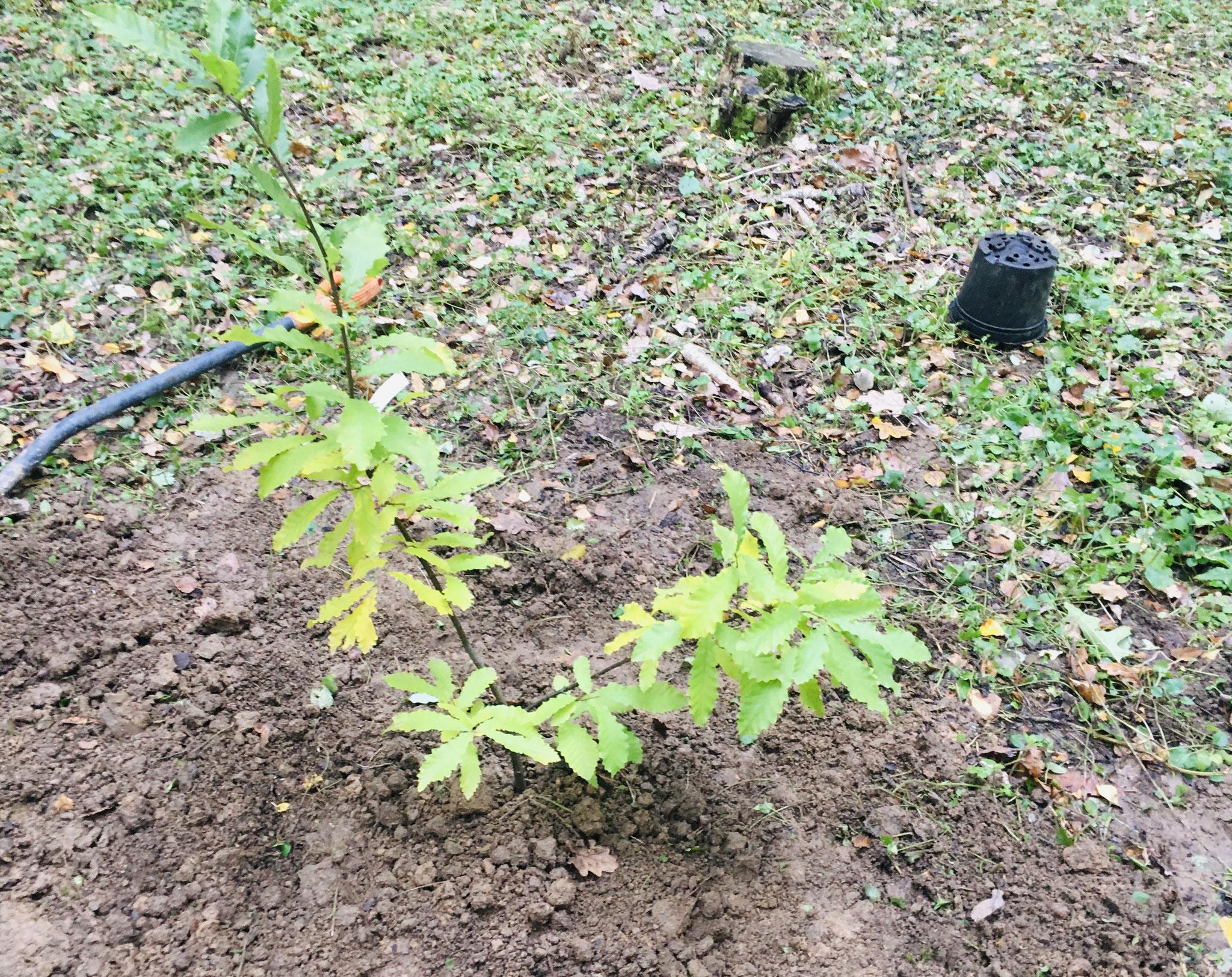 Pas peu fière de ma première plantation sur le sol russe !