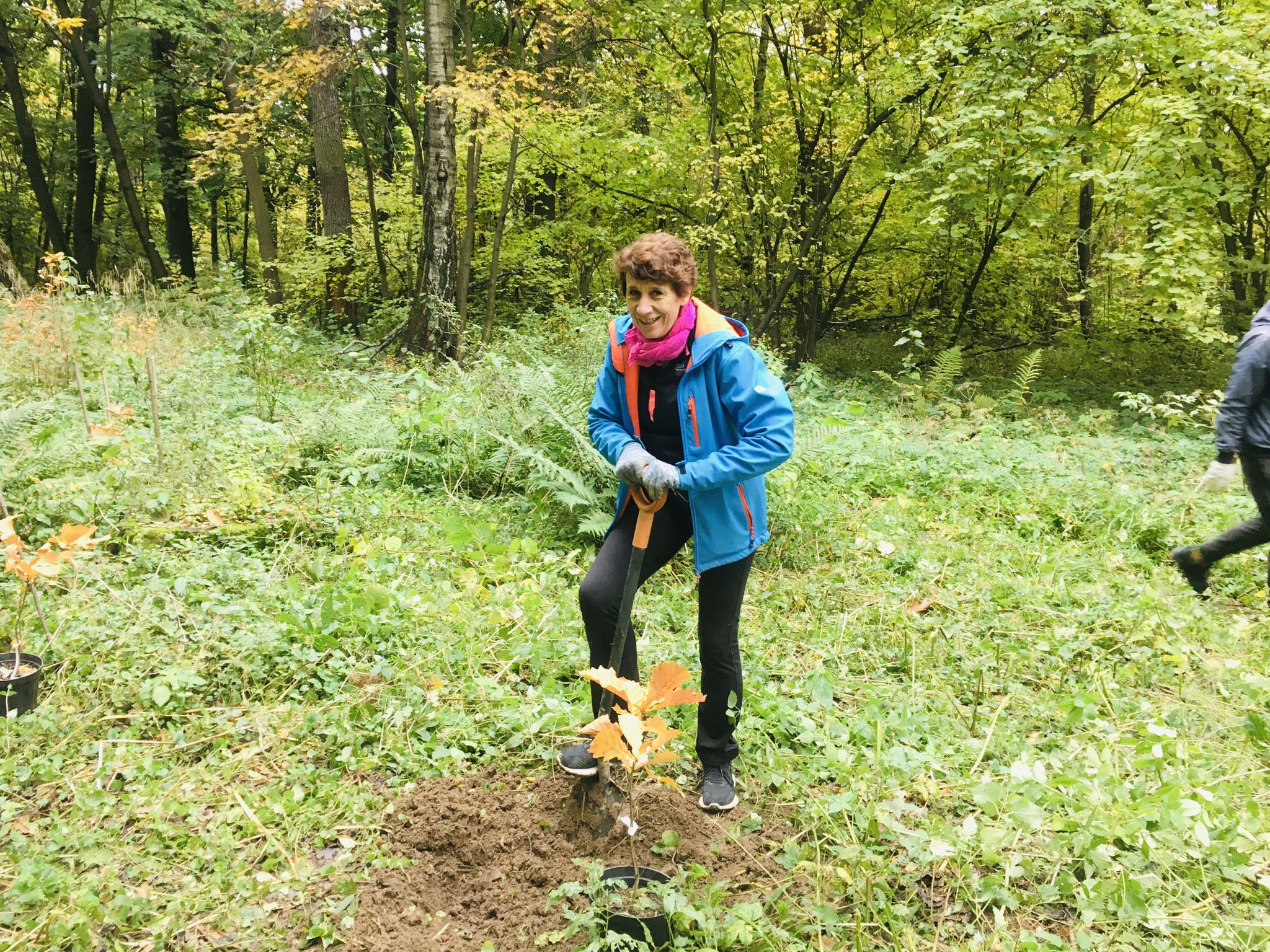 Je creuse une petite rigole autour de mon chêne, pour qu'il profite mieux de l'eau qui sera apportée tout à l'heure