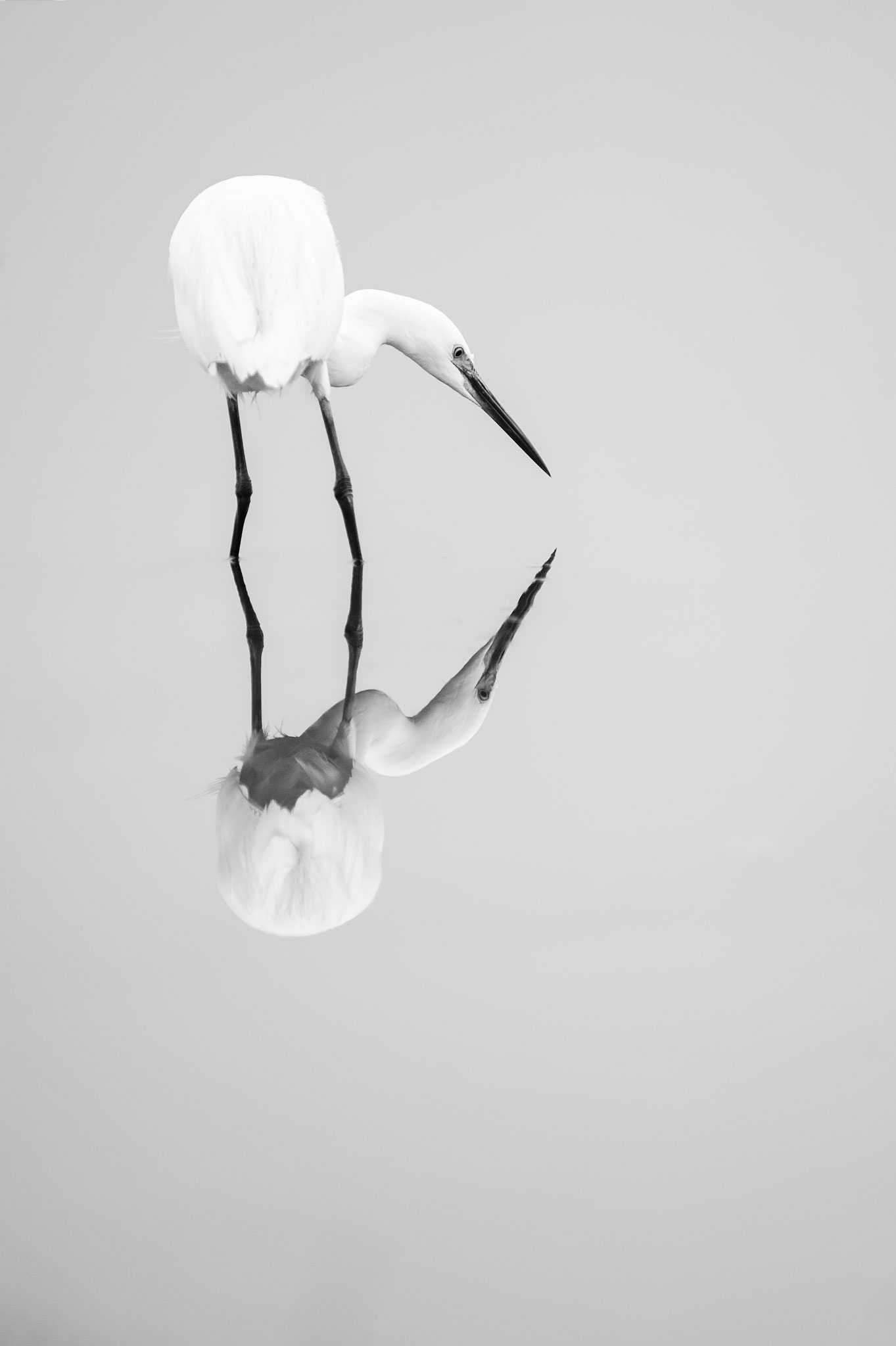 "Dany Godineau ""Black and White birds"""