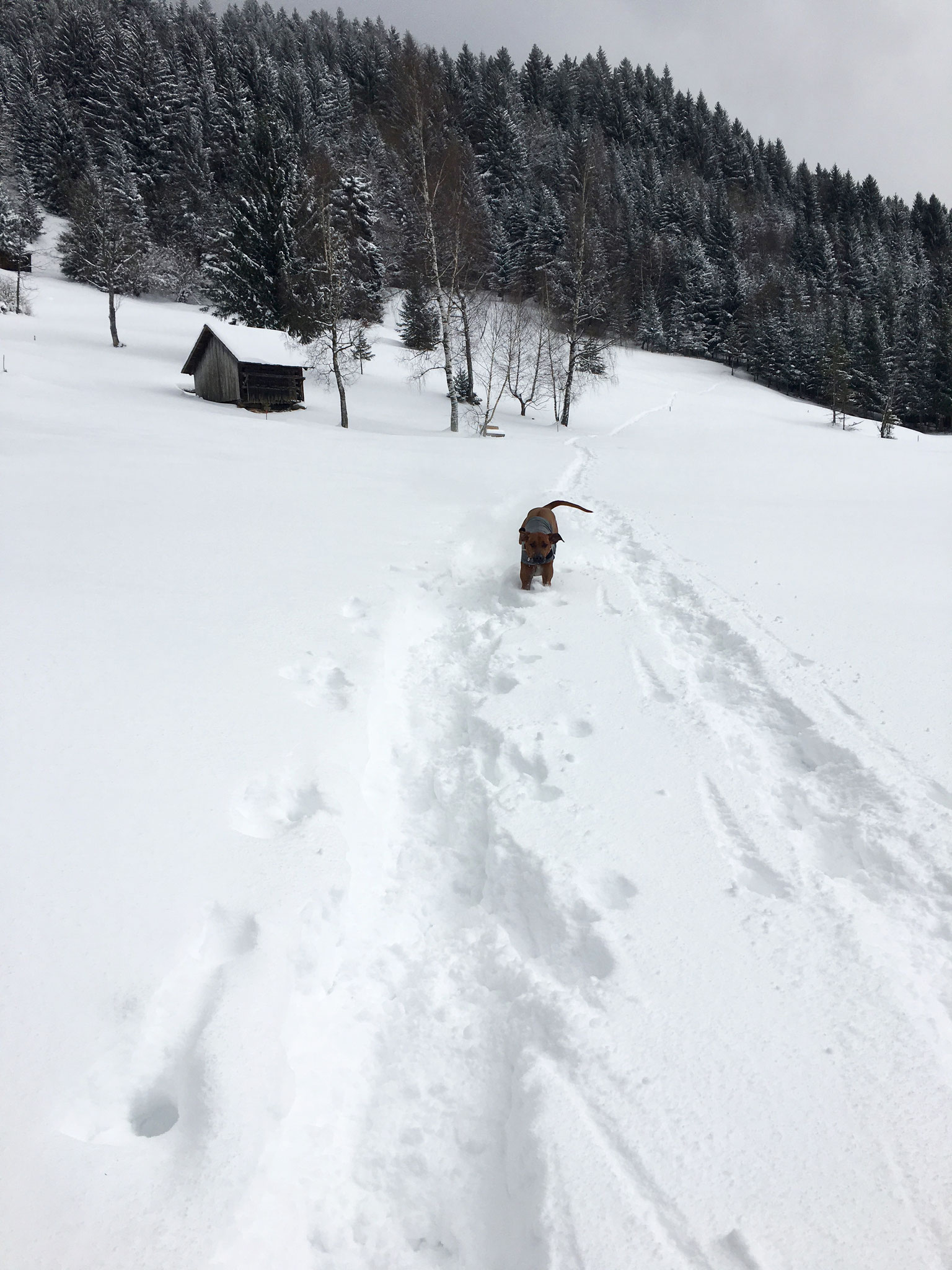 Spass im Schnee!