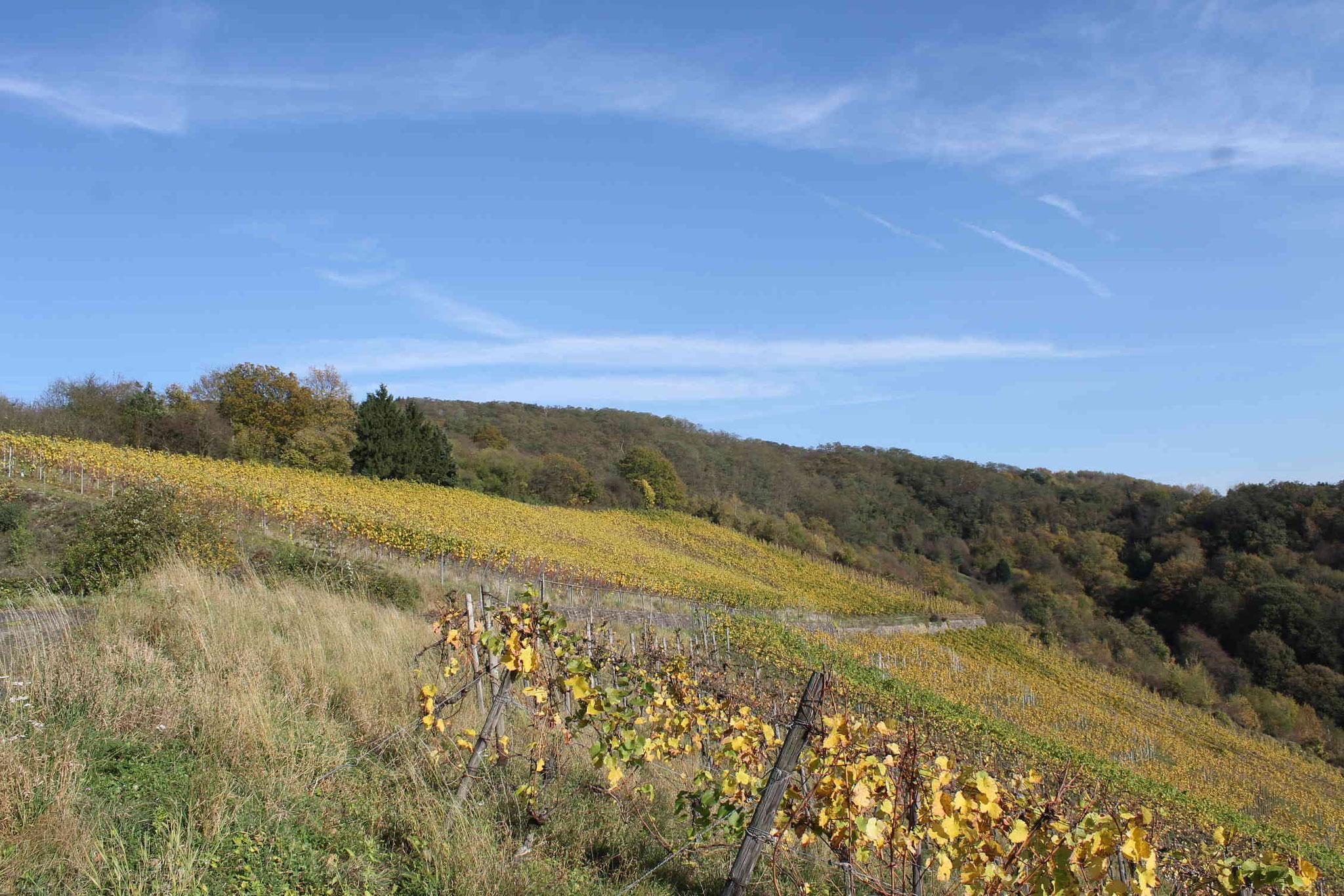 Ansicht: Leutesdorfer Weinberge im Herbst