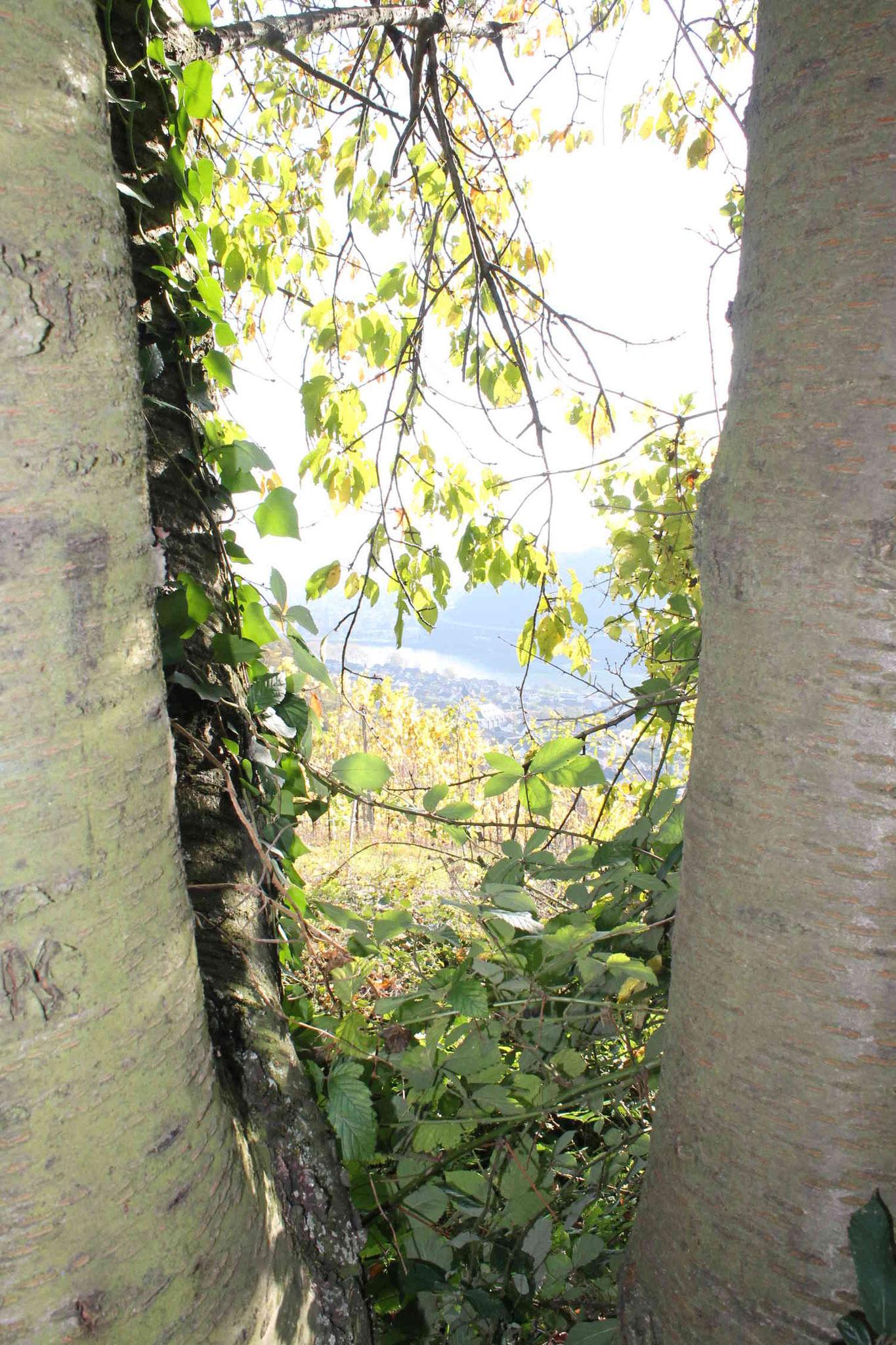 Blick aus den Leutersdorfer Weinbergen auf Namedy