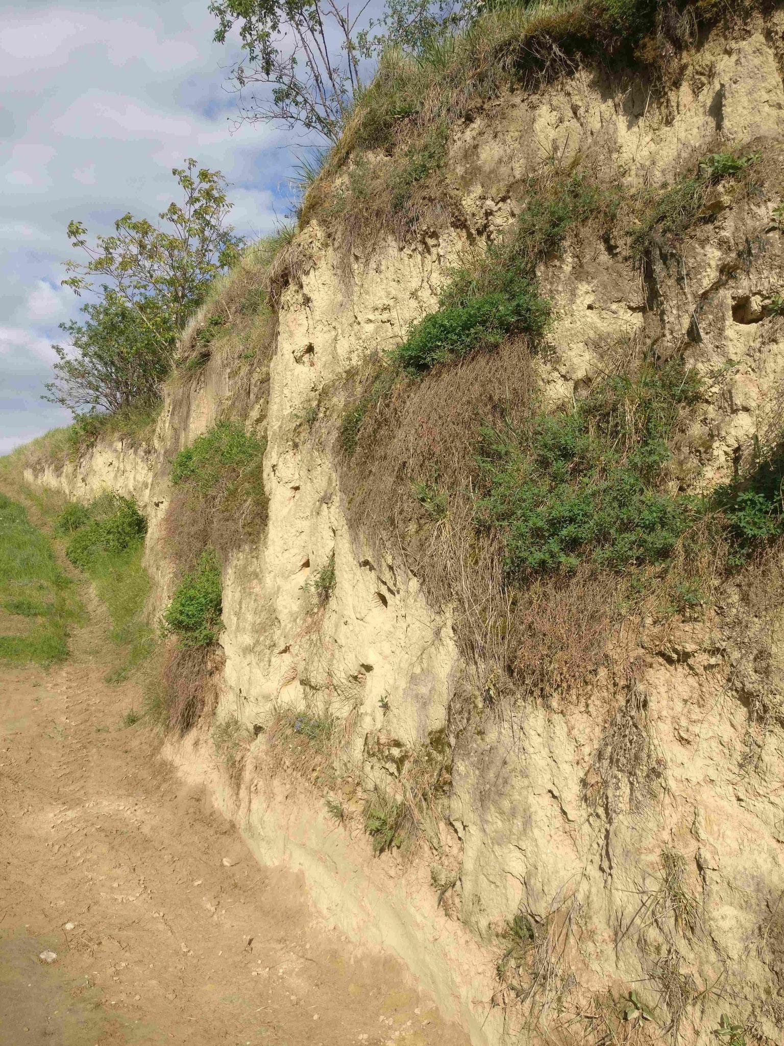 Fels am Wagram: Löss-Schicht