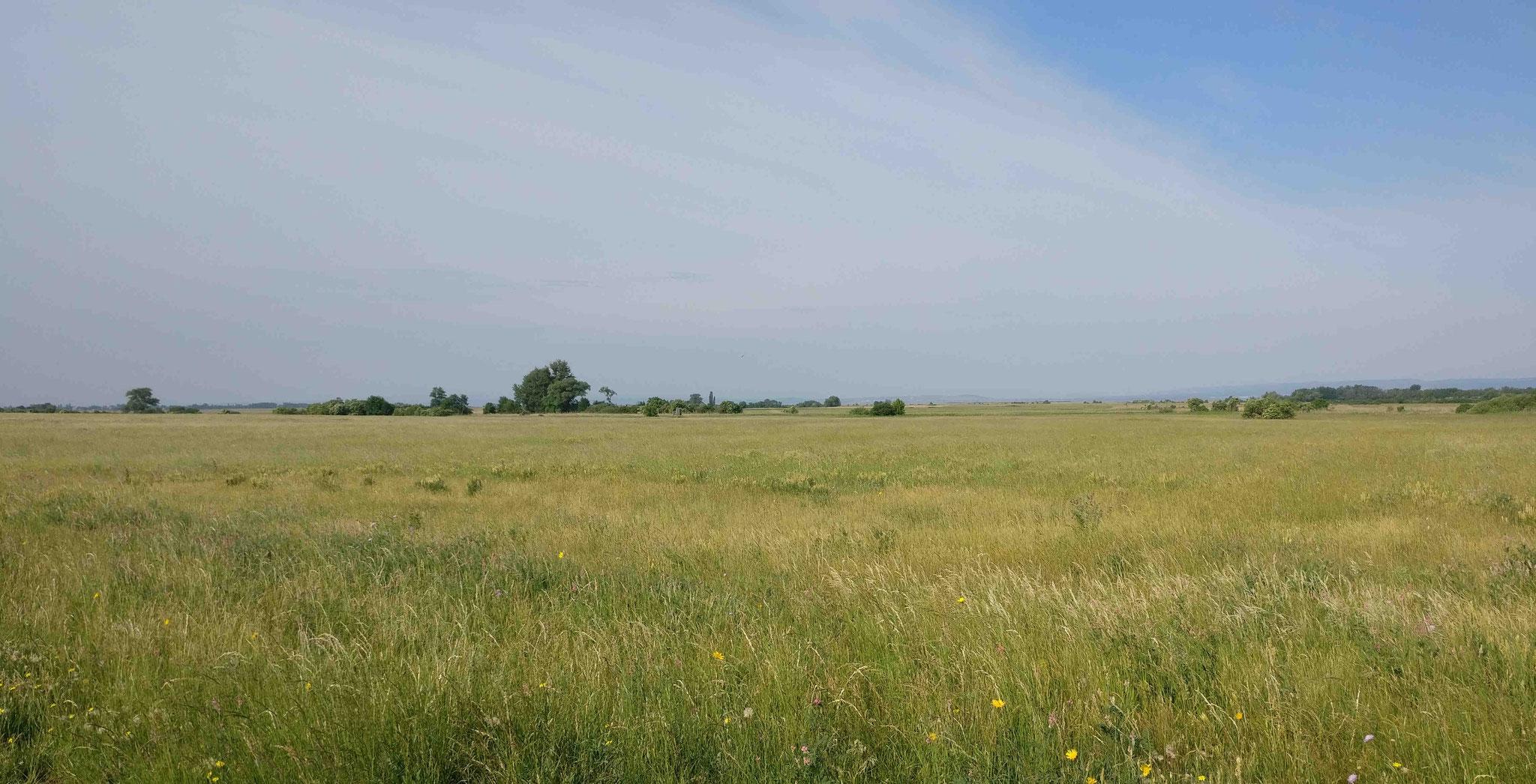 Heidelandschaft an der Ostseite des Neusiedler Sees