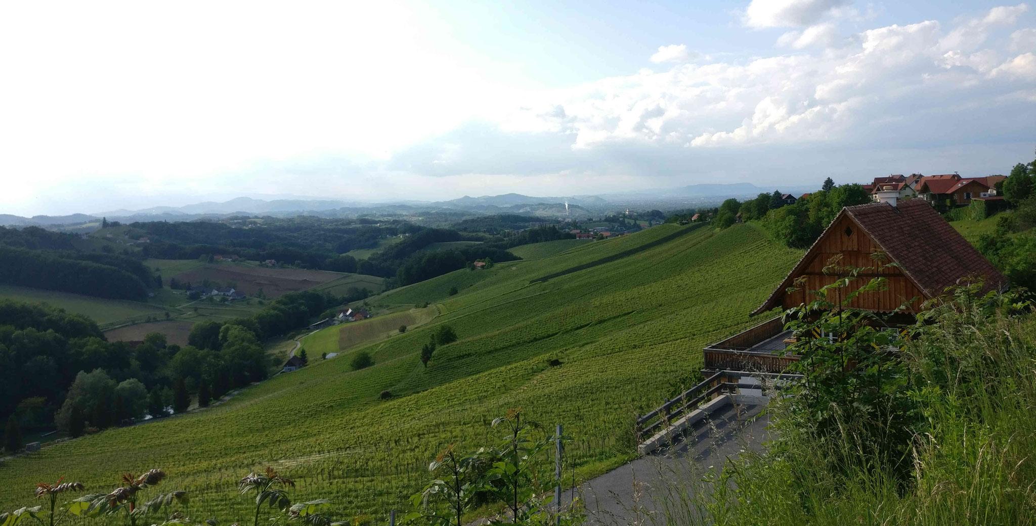 Weingärten bei Ratsch an der Weinstraße