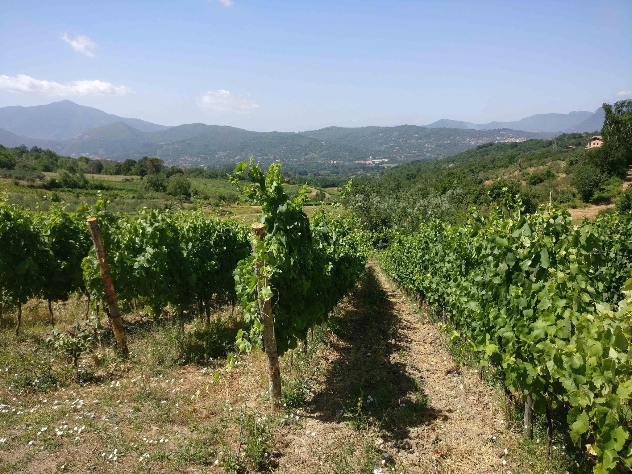 Landschaft in der Region Avellino
