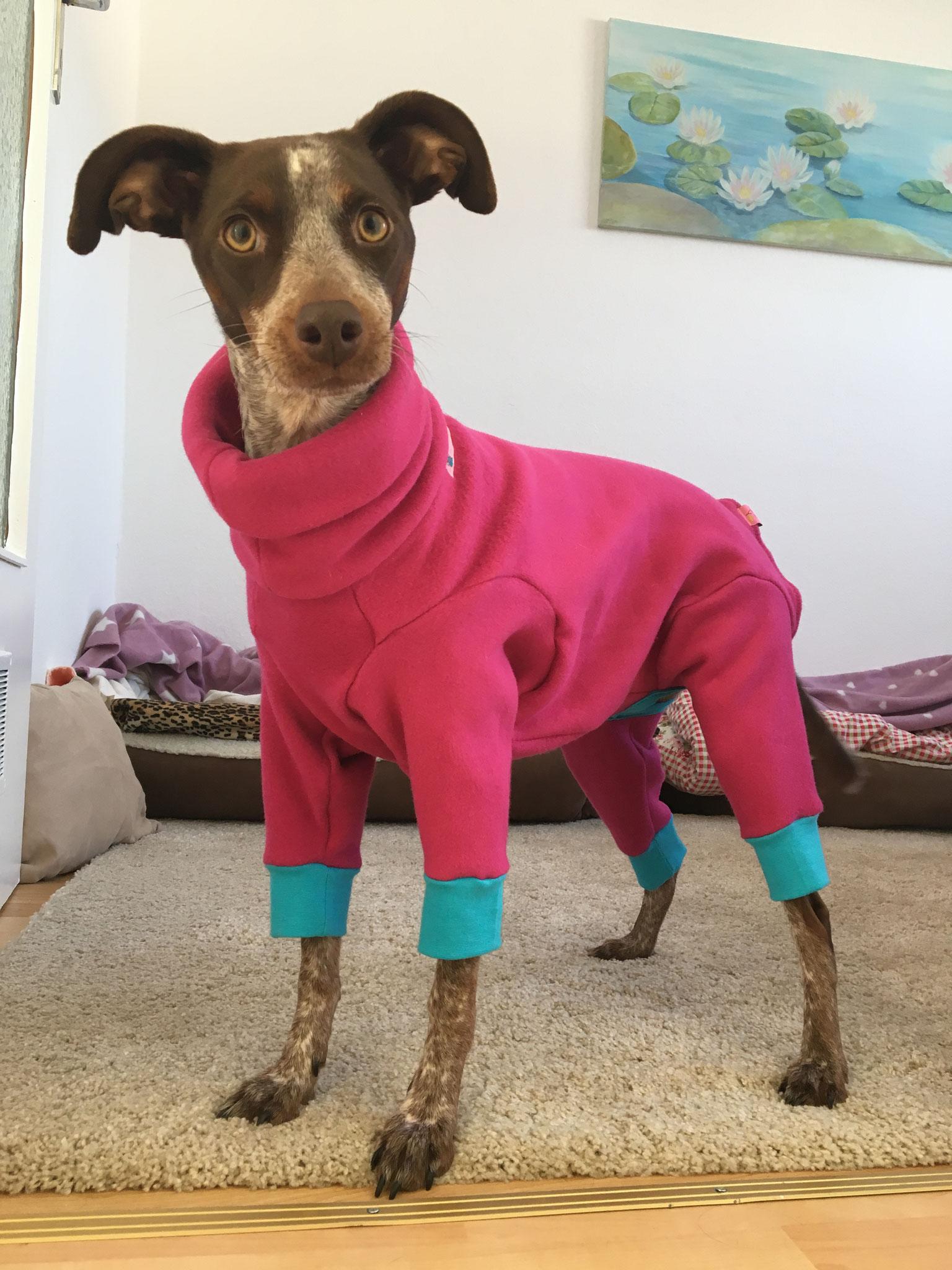 Doggy-Jumpsuit *exclusive* HIER im Shop!