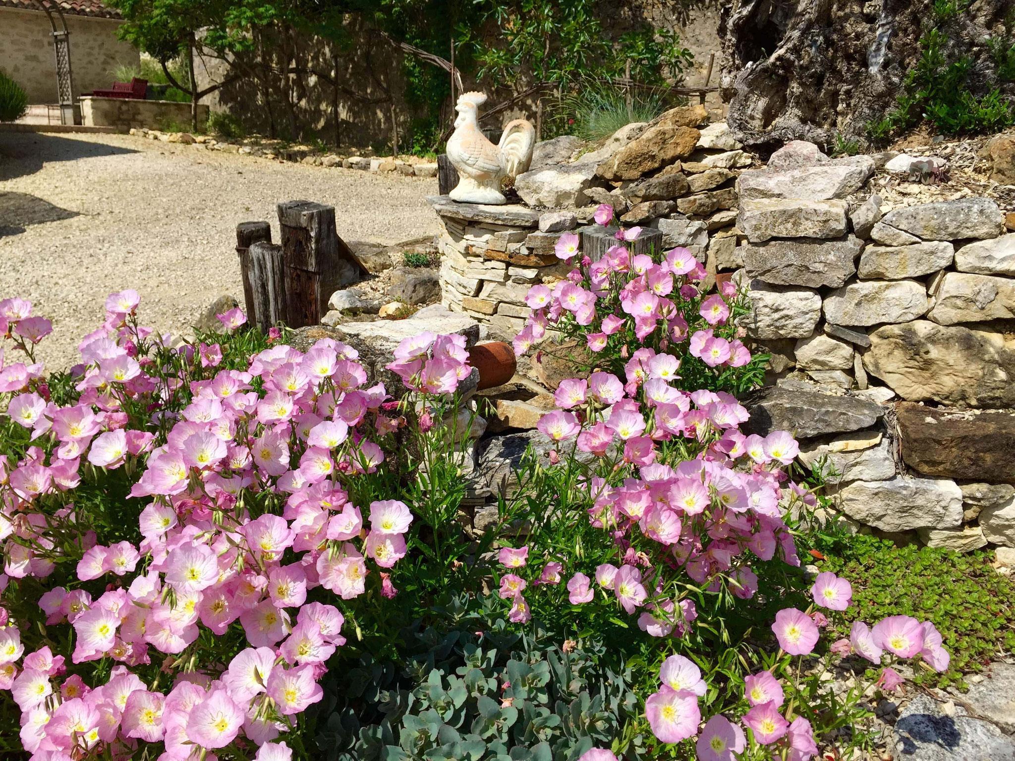 Floraison sous l'olivier