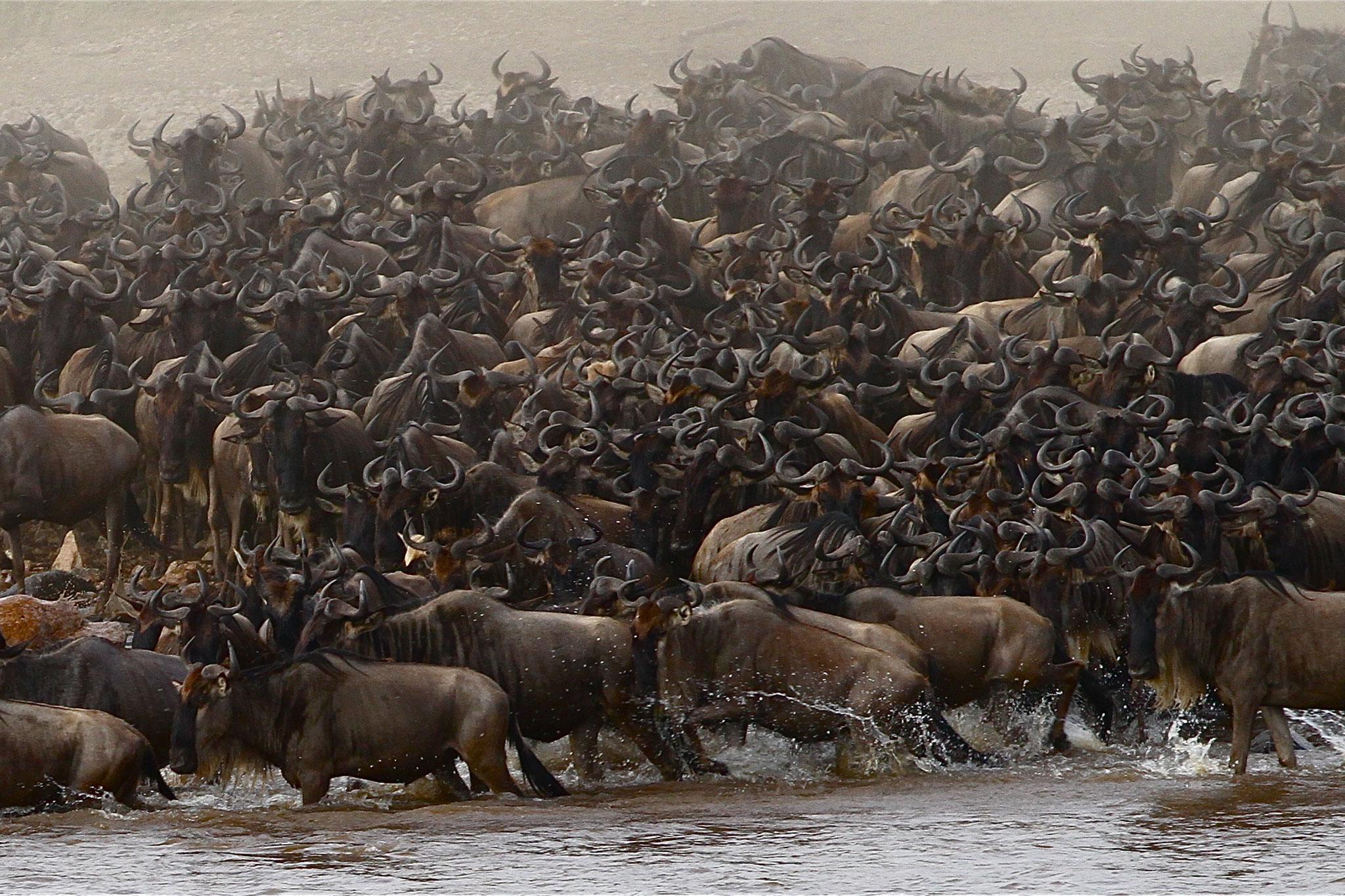 Mara River an der Grenze zwischen Kenia und Tansania